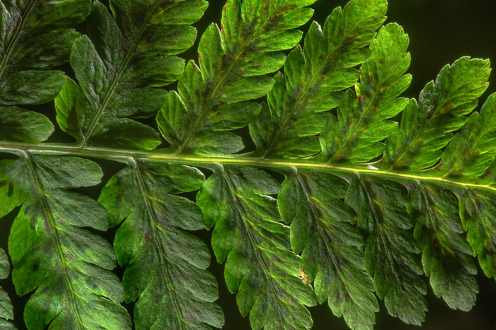 Fern leaf in greenhouses of Botanic Gardens of...Institute. St.Petersburg, Russia