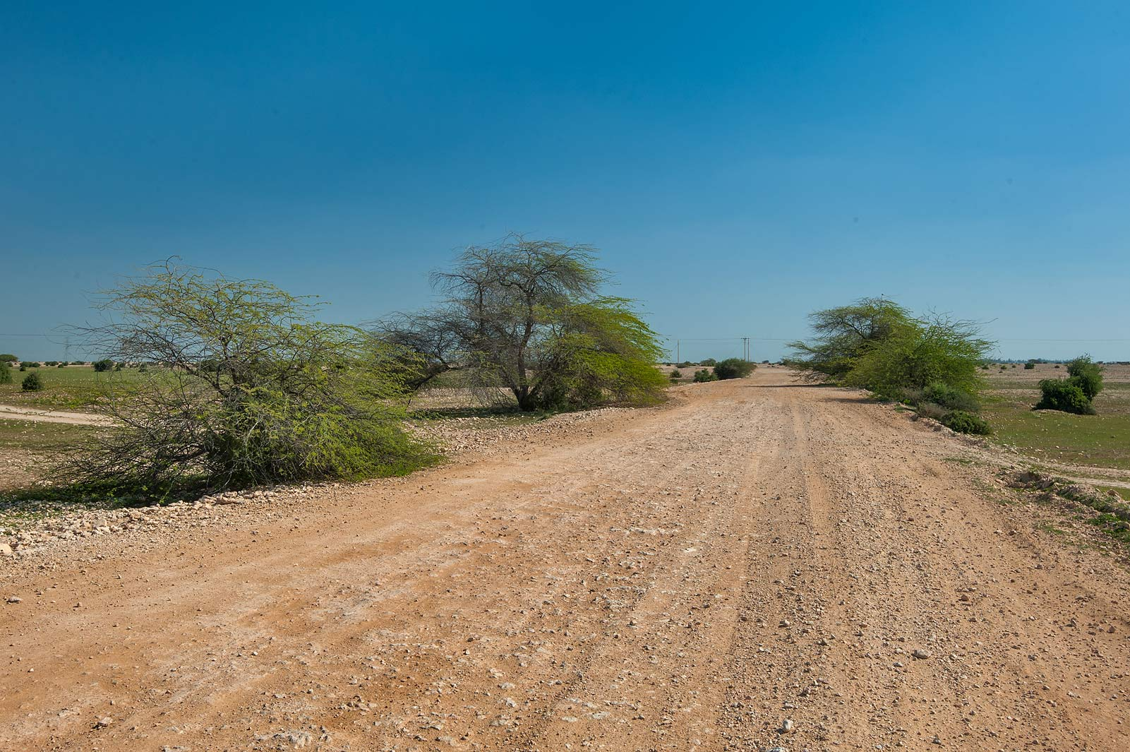 Rural road near Al Mustafawi Farm House in Al Mardiya-Wasit area. Northern Qatar