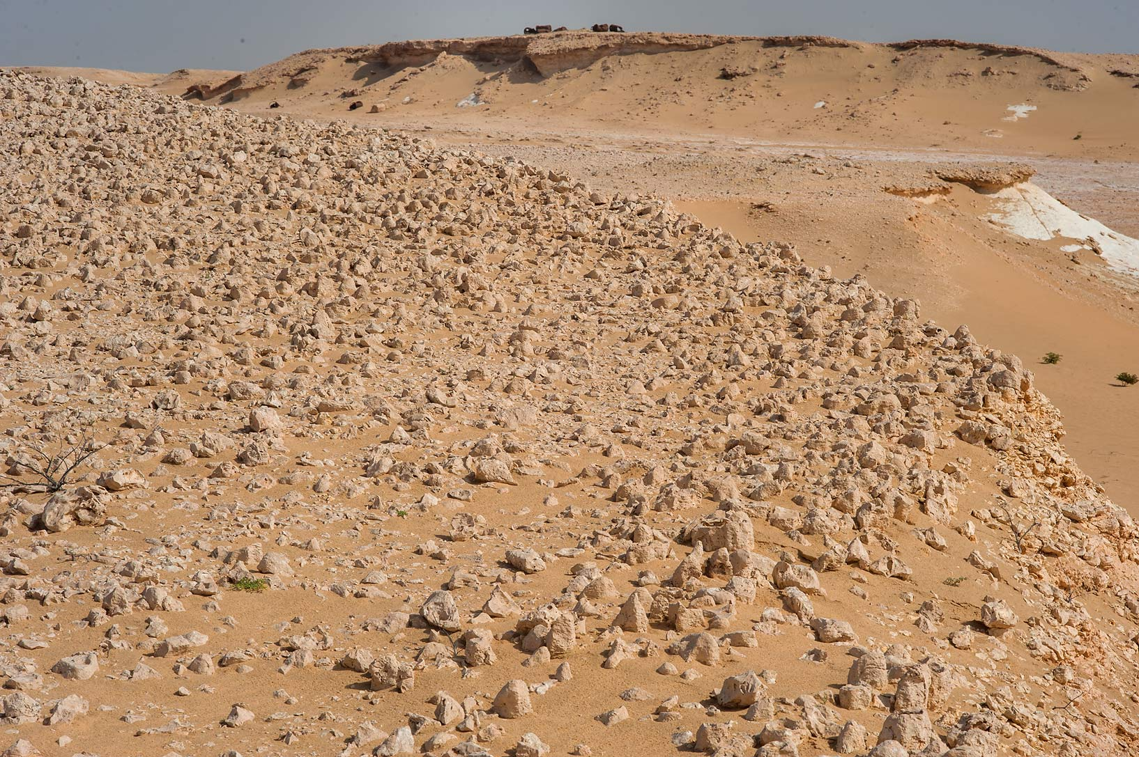 Columnar fossilized intertidal stromatolites...an Nakhsh) in south-western Qatar