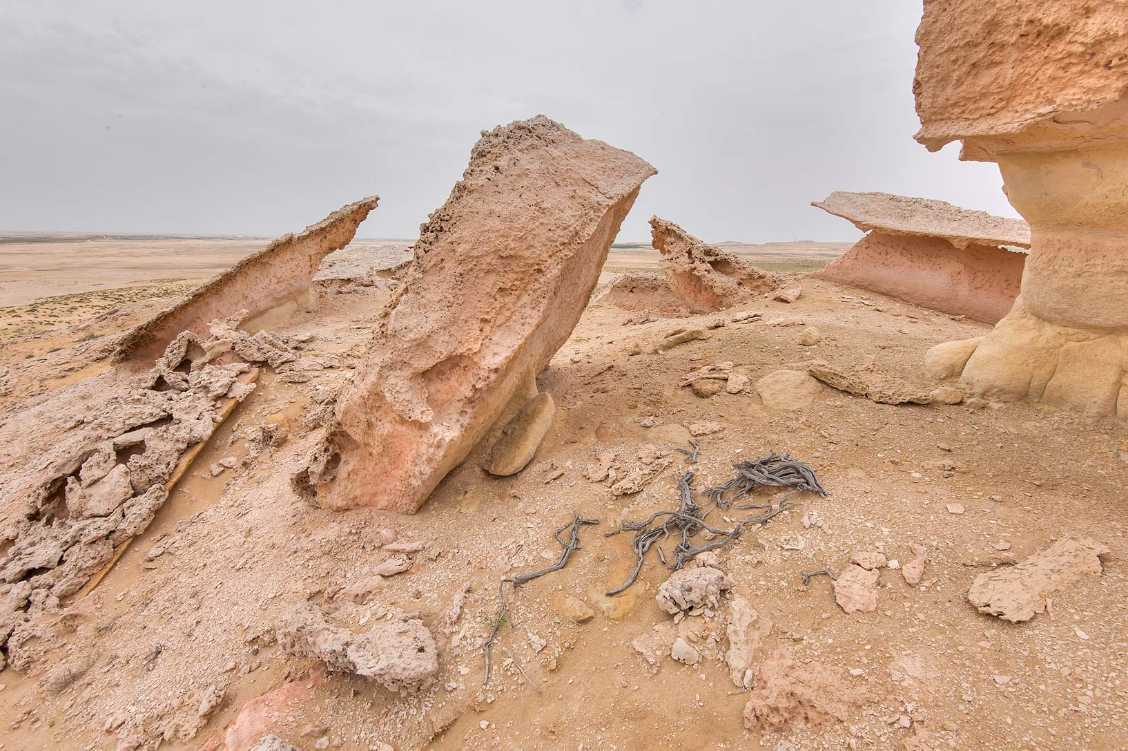Dry wood near the edge of limestone cliffs in...Reserve near Abu Samra. Southern Qatar