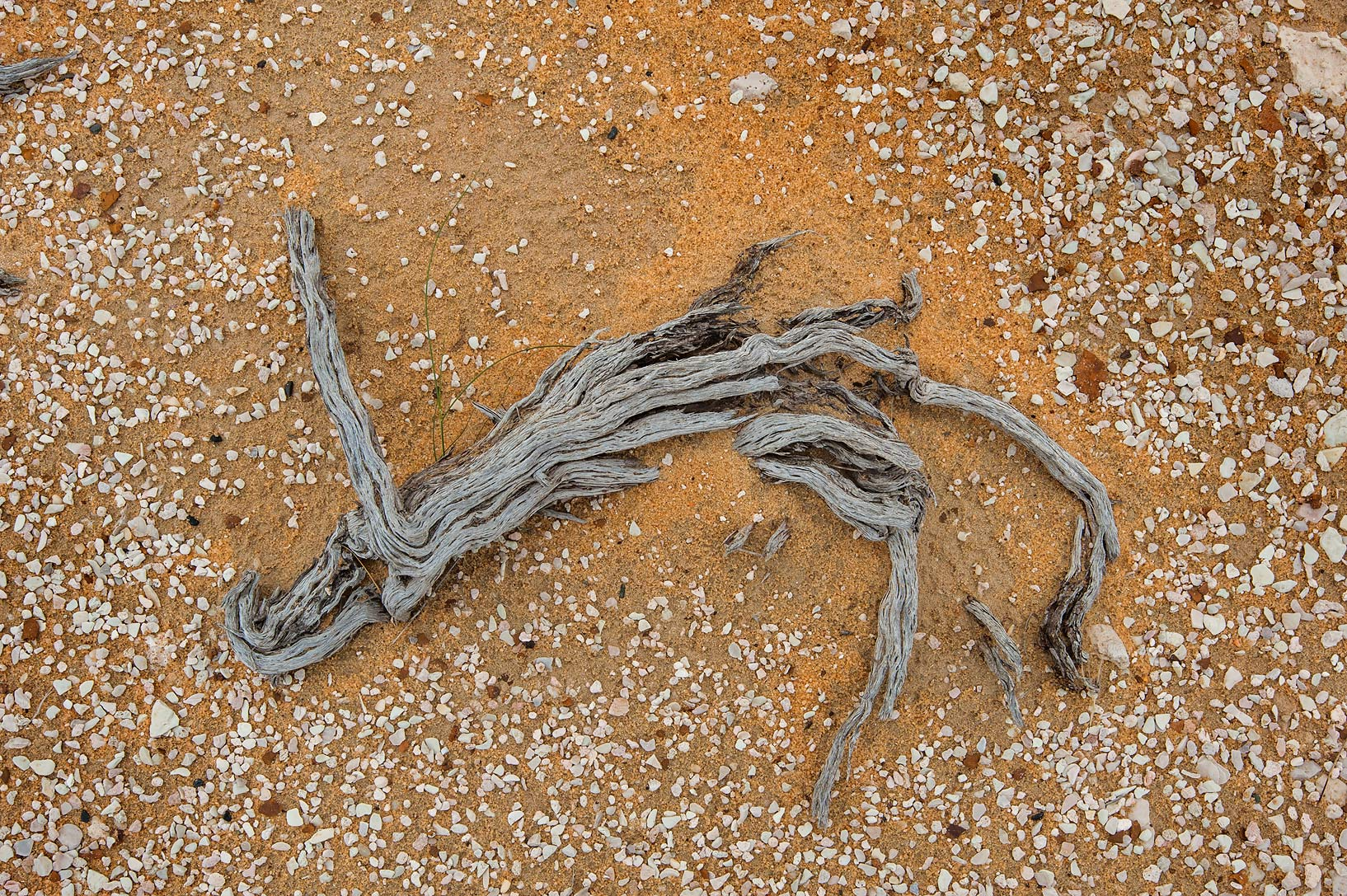 Decomposing dry wood on a gravel plane in...Reserve near Abu Samra. Southern Qatar