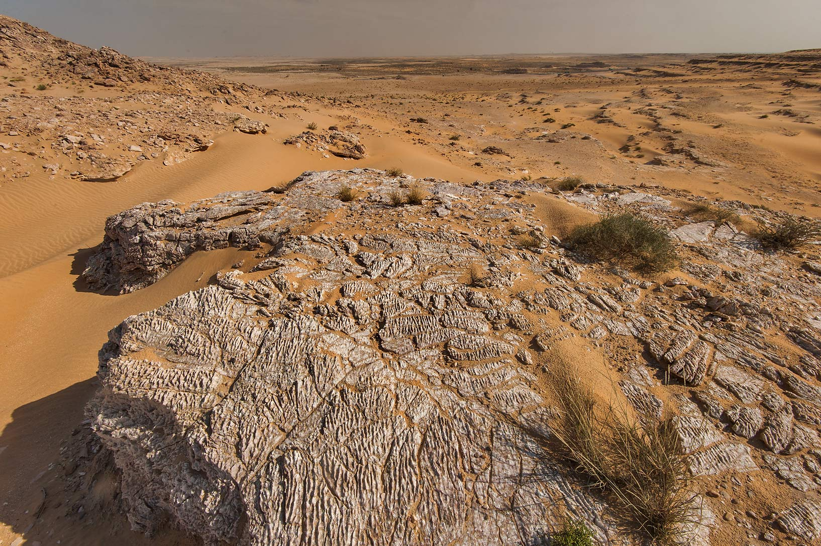Field of glittering gypsum crystals from a slope of Jebel Al-Nakhsh in south-western Qatar