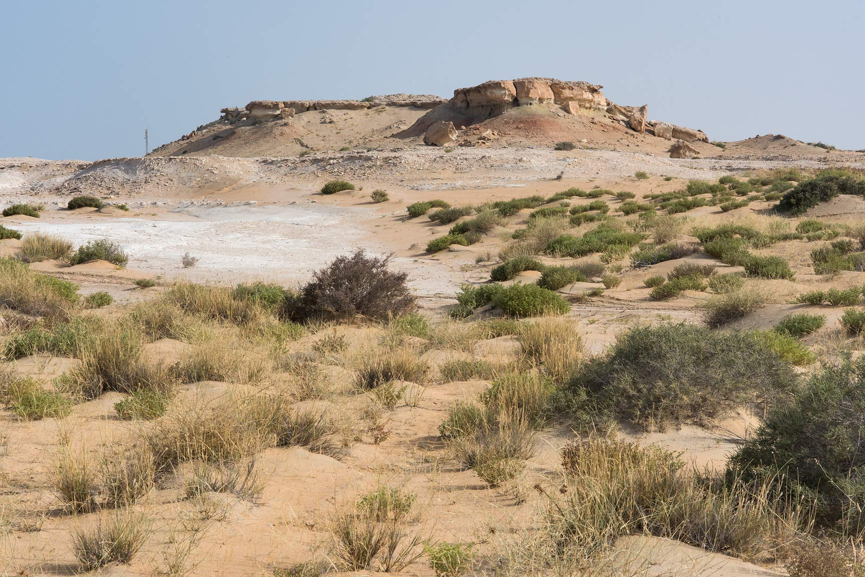 Vegetation at the foot of limestone cliffs in...Reserve near Abu Samra. Southern Qatar