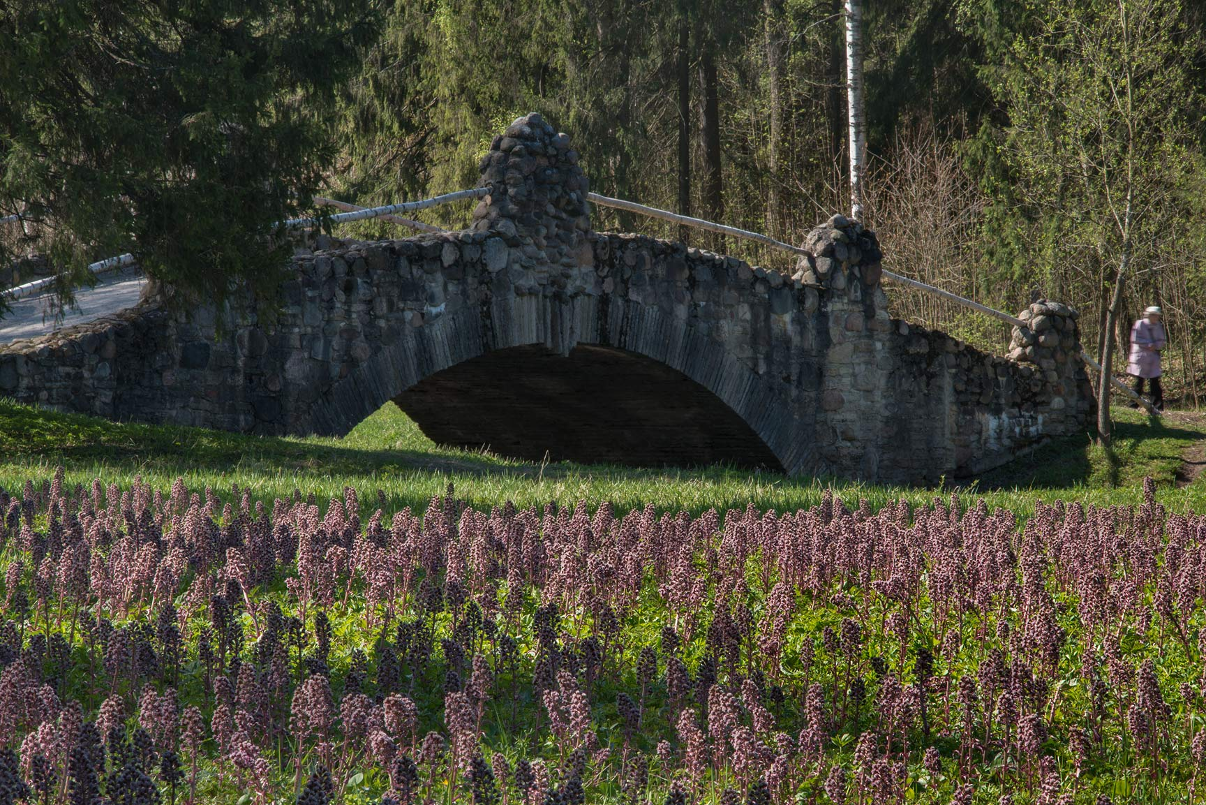 Novosilviysky stone bridge, with butterbur...suburb of St.Petersburg, Russia