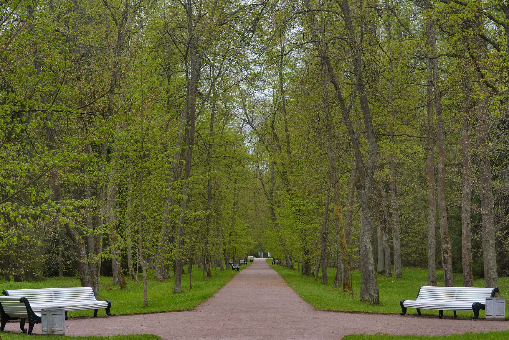 Lipovaya Alley of Upper Garden. Oranienbaum (Lomonosov), a suburb of St.Petersburg, Russia