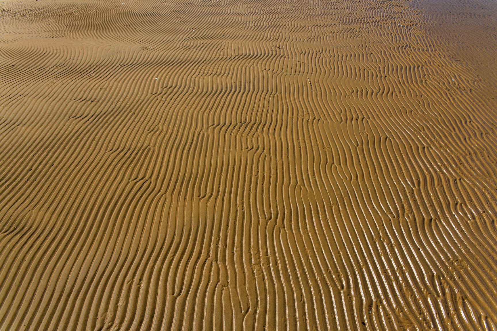 Texture of sand ripples on a beach east of Solnechnoe, near St.Petersburg. Russia