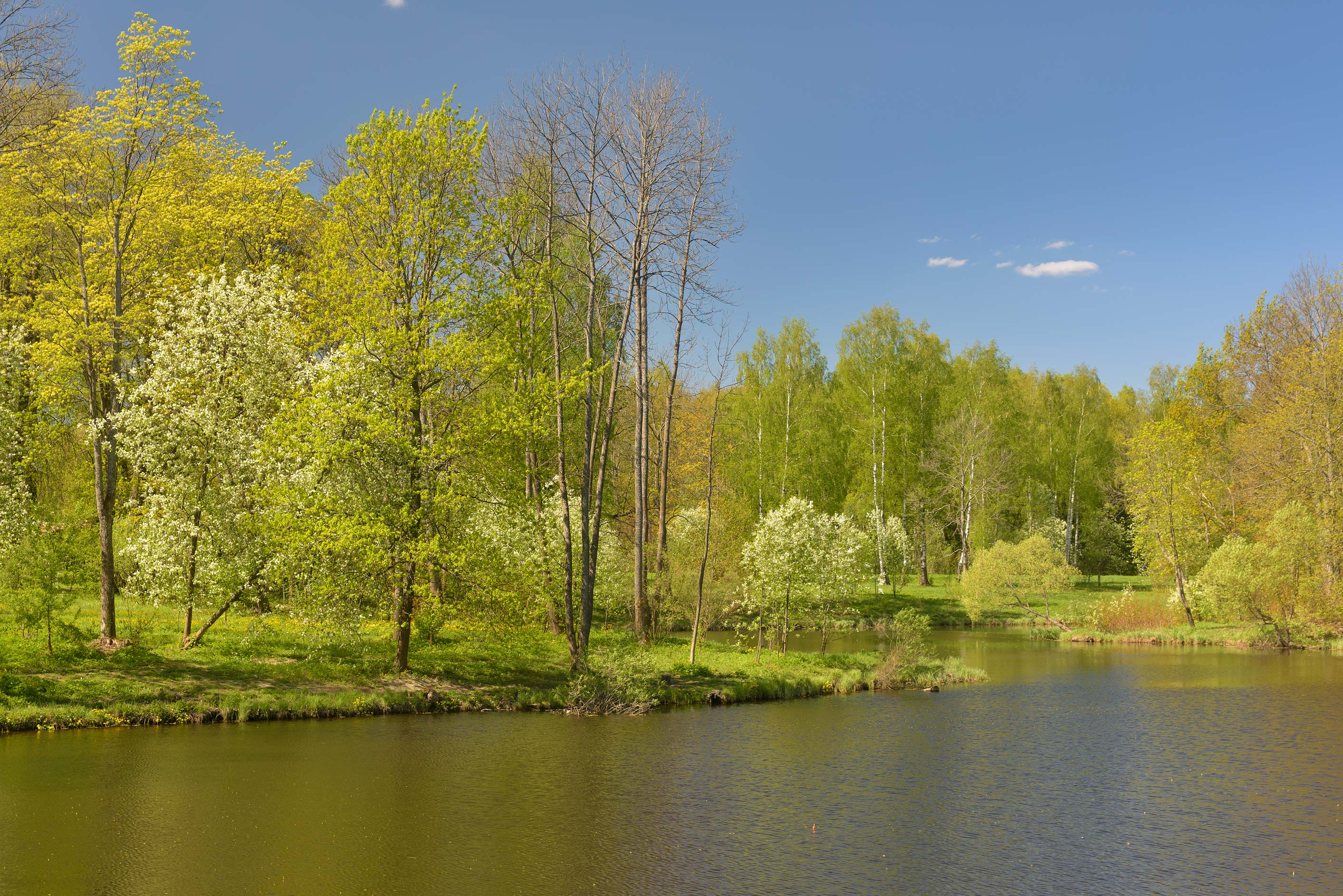 Lower Lamskiy Ponds in Alexander Park. Pushkin...south from St.Petersburg, Russia