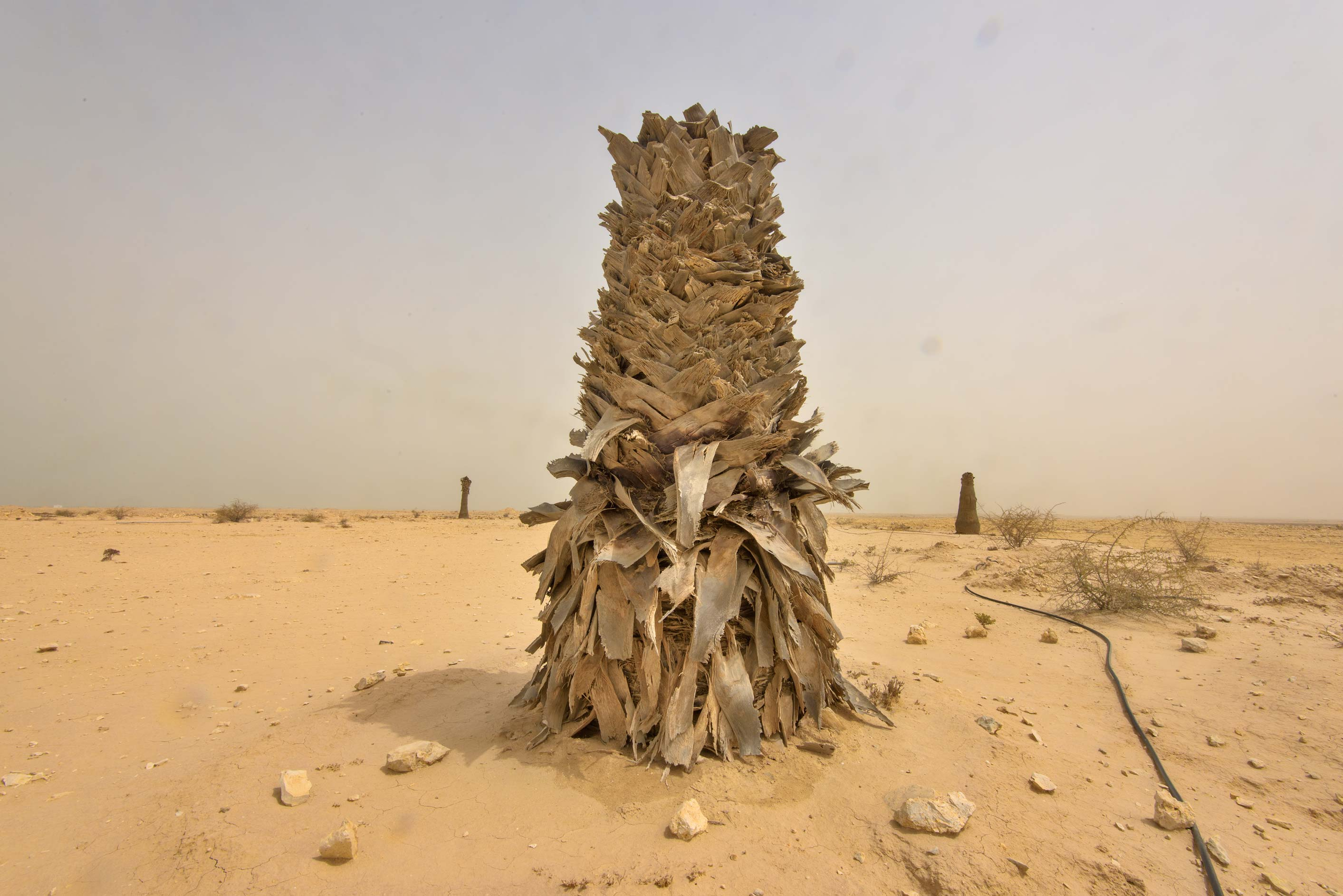 Palm trunk on old roundabout at the entrance of...western coast, Ash Shamal area. Qatar