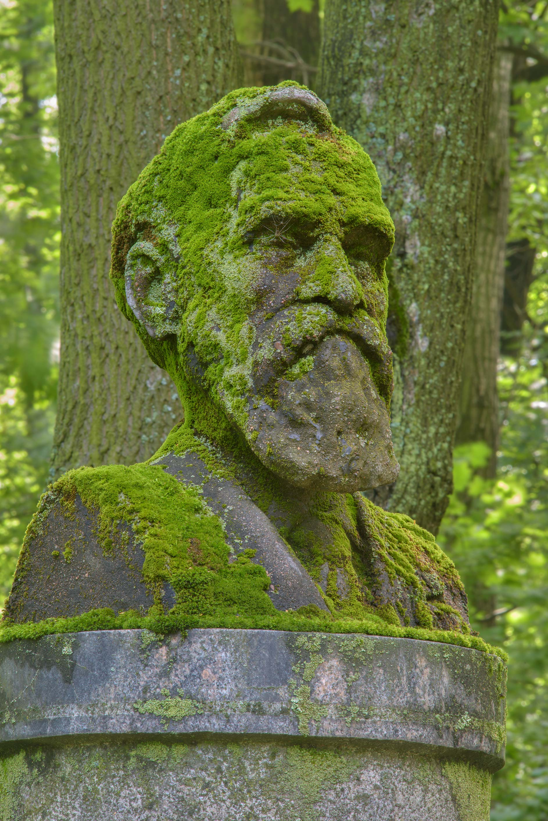 Side view of a mossy stone head of a Soviet...Cemetery. St.Petersburg, Russia