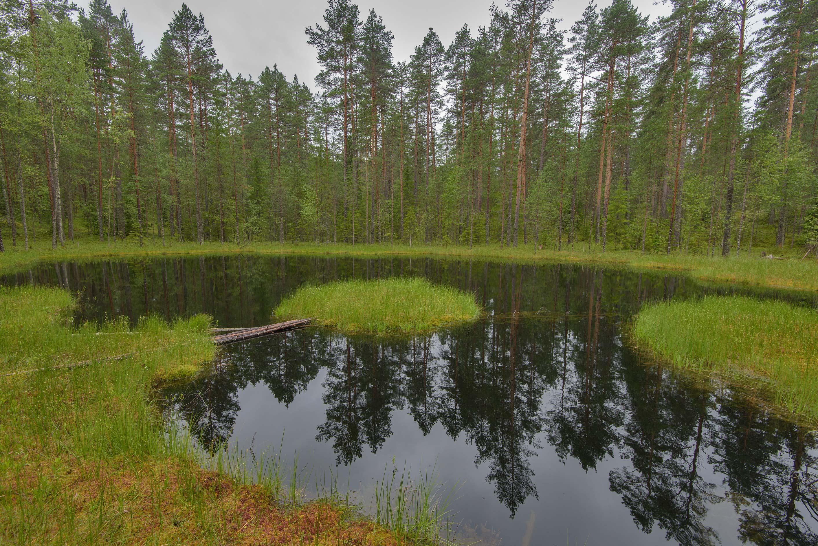 Floating islands in a small lake near Orekhovo, 40 miles north from St.Petersburg. Russia