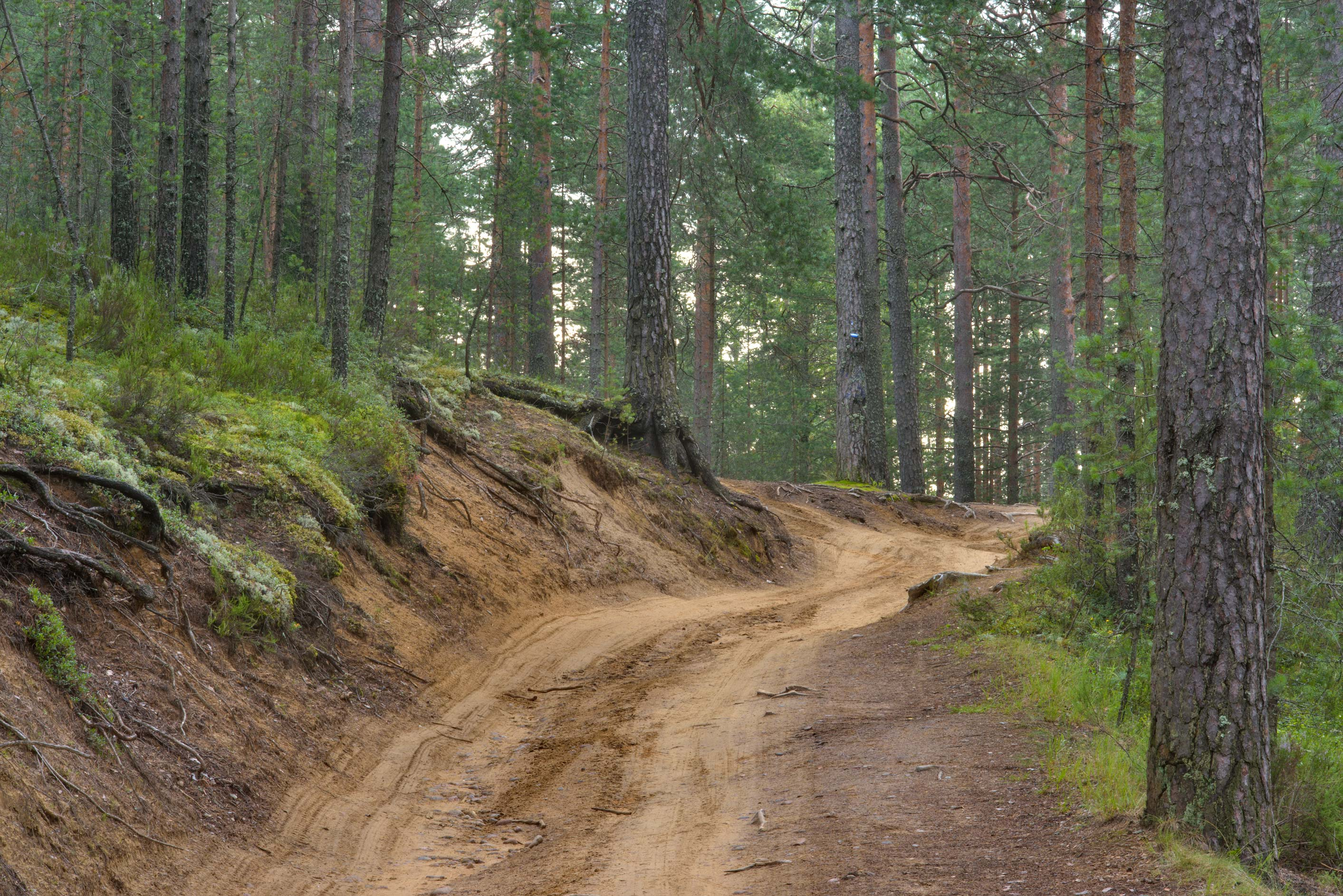 Sandy road near Orekhovo, north from St.Petersburg. Russia