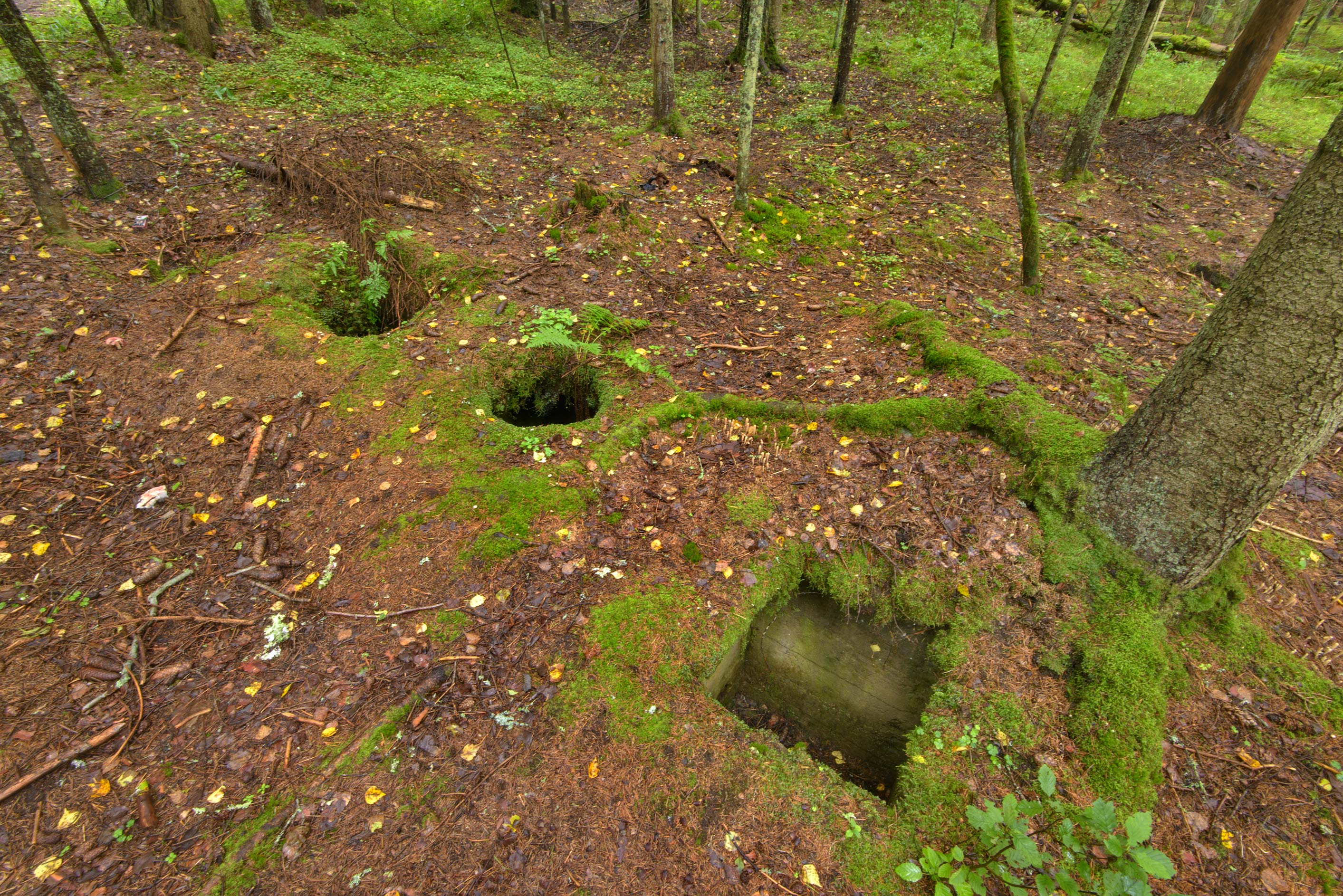Mossy holes in area of Bienkovsky Mansion in...Petersburg. Leningrad Region, Russia