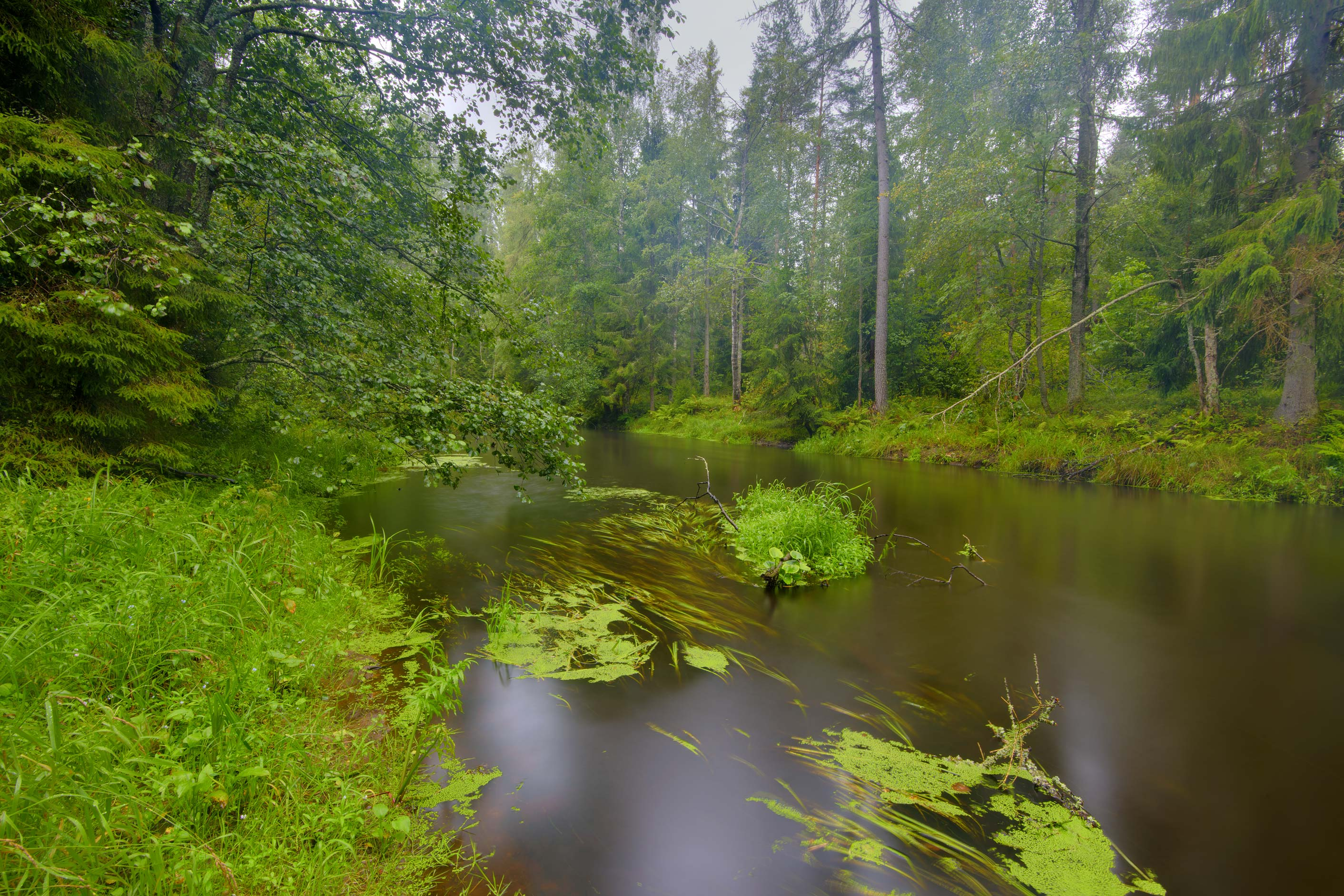 Roshchinka River in Lindulovskaya Larch Grove...north-west from St.Petersburg. Russia