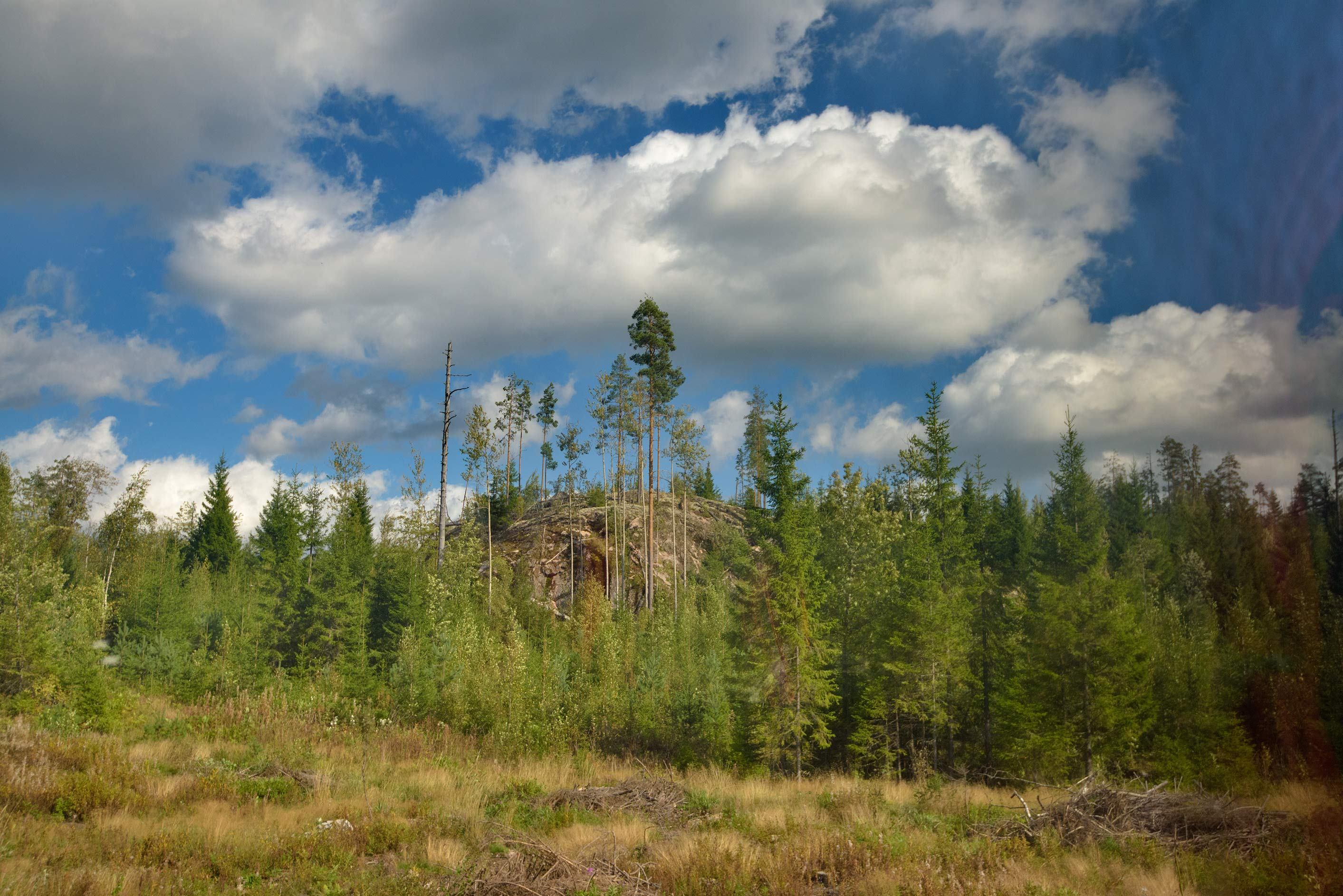 Forest near Kangaslammentie Rd., view from a tourist bus. Southern Finland