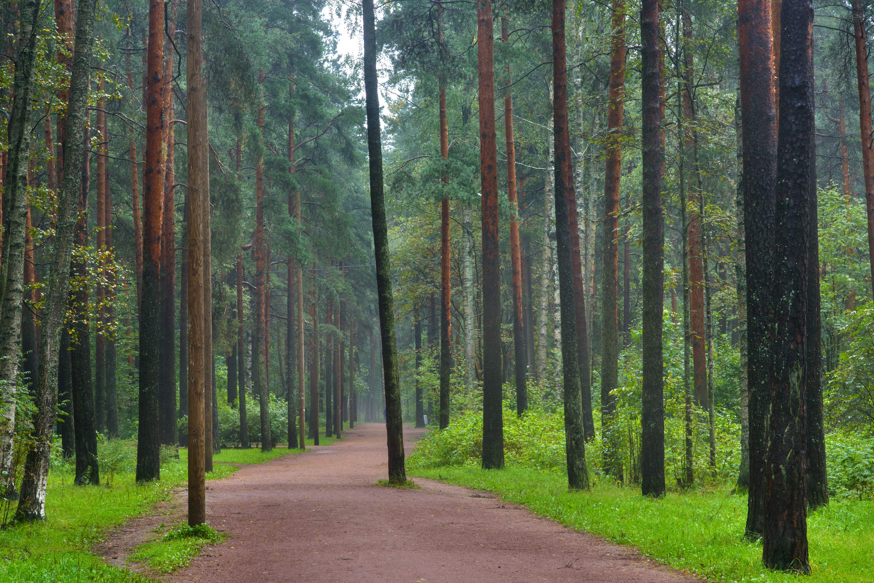 Forest road in Sosnovka Park. St.Petersburg, Russia