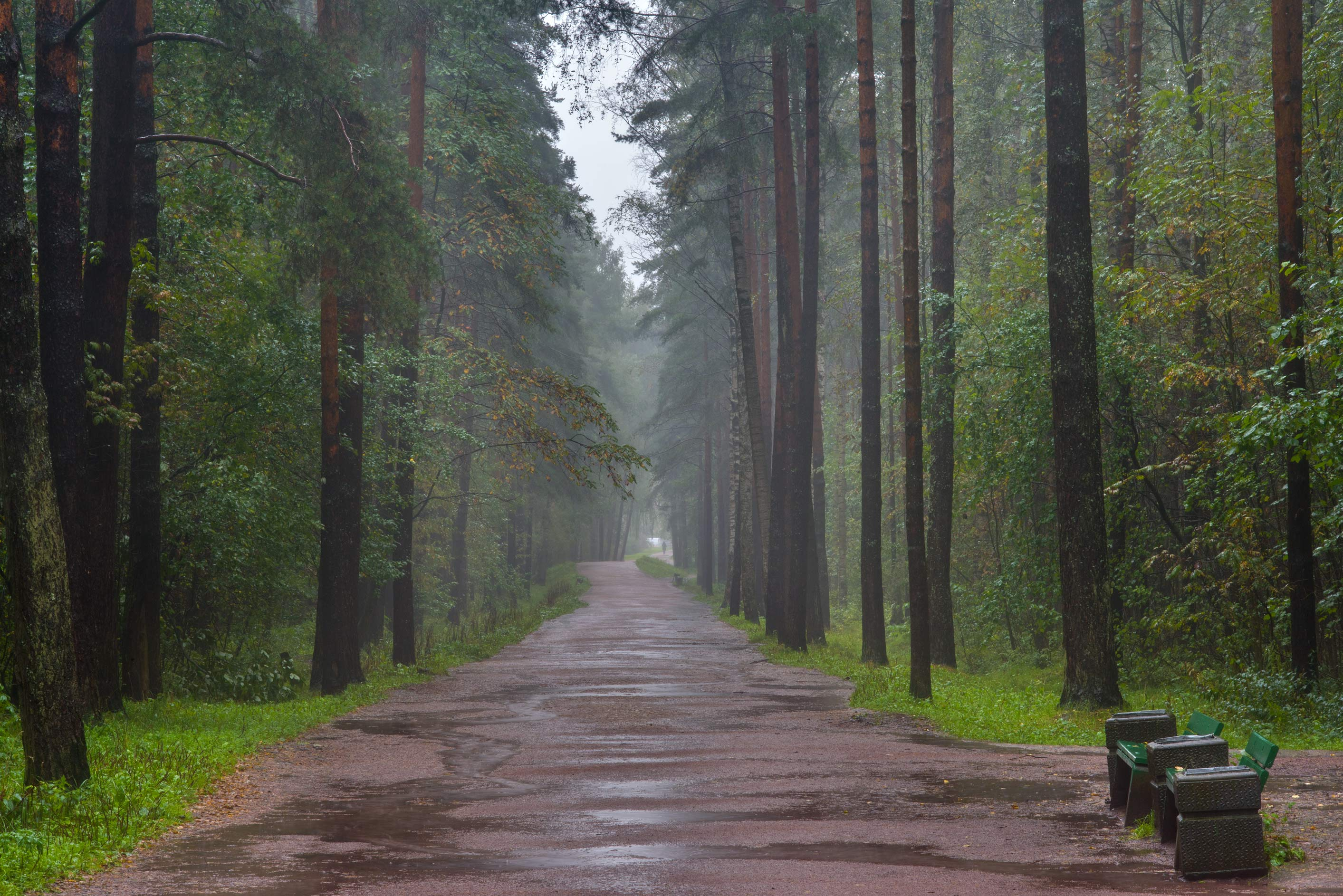 Road at rain in Sosnovka Park. St.Petersburg, Russia