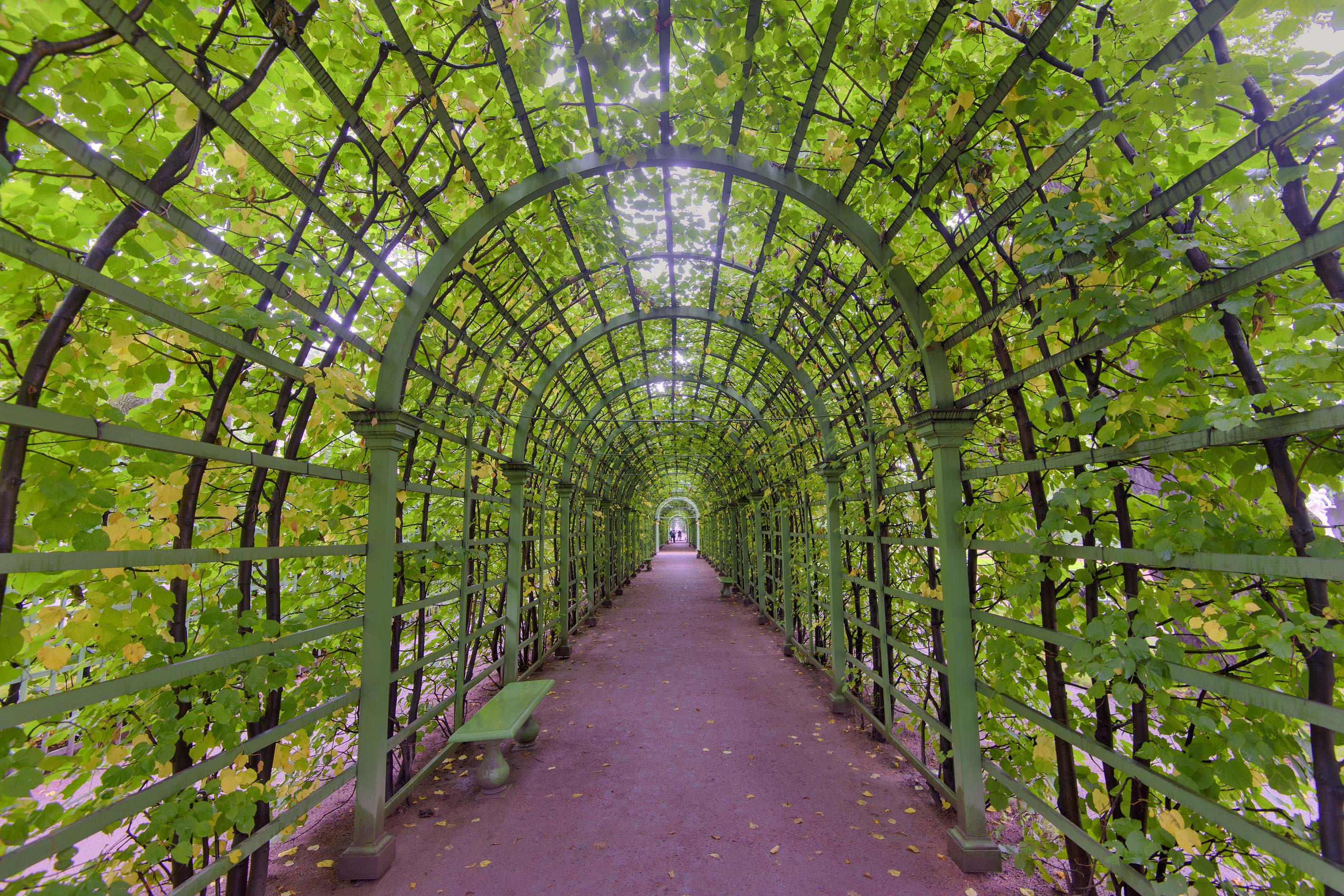 Green arbor tunnel in Letny Sad (Summer Garden). St.Petersburg, Russia