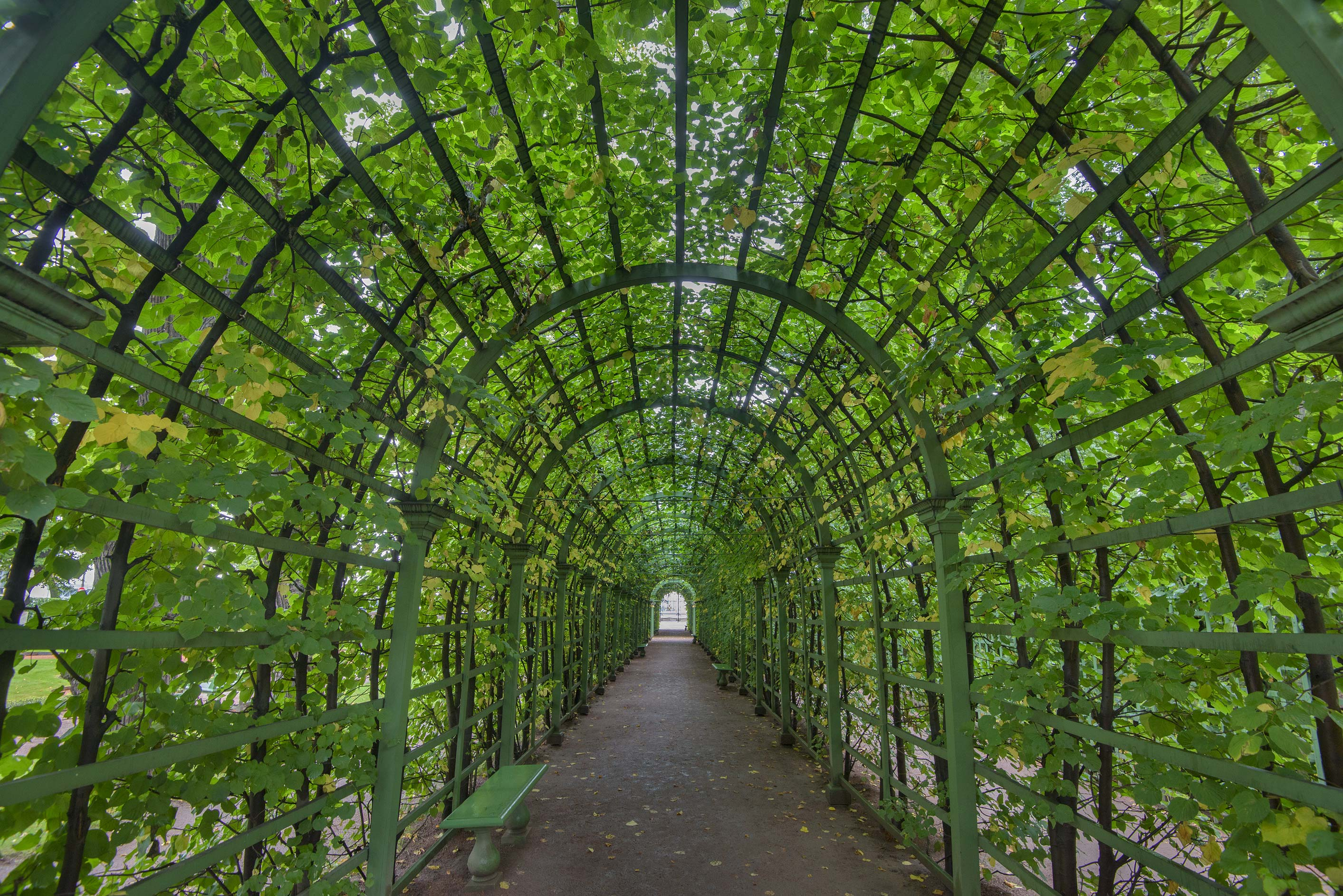 Arbor tunnel in Letny Sad (Summer Garden). St.Petersburg, Russia