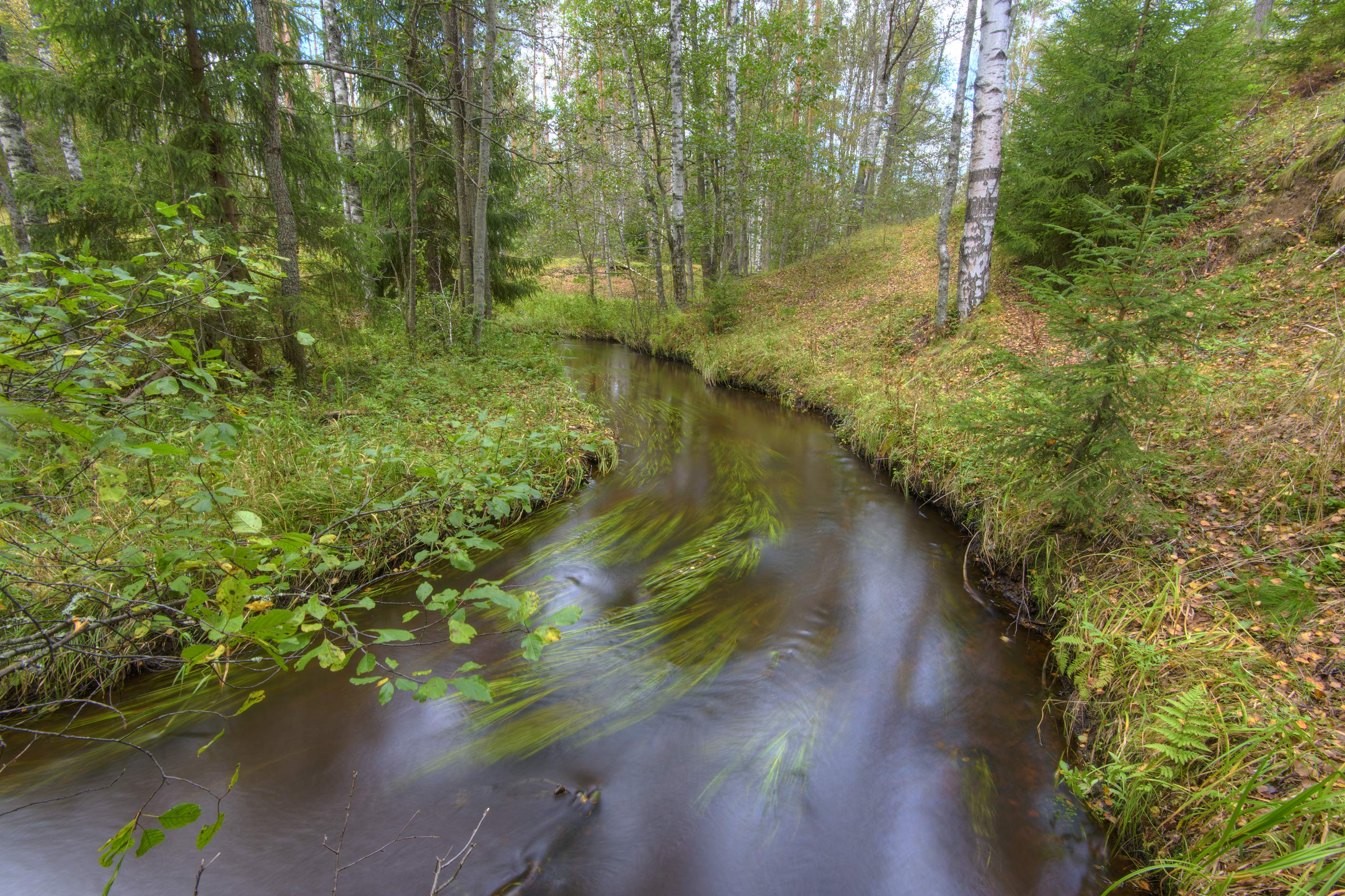 Bend of Prytky Creek near Orekhovo, 40 miles north from St.Petersburg. Russia