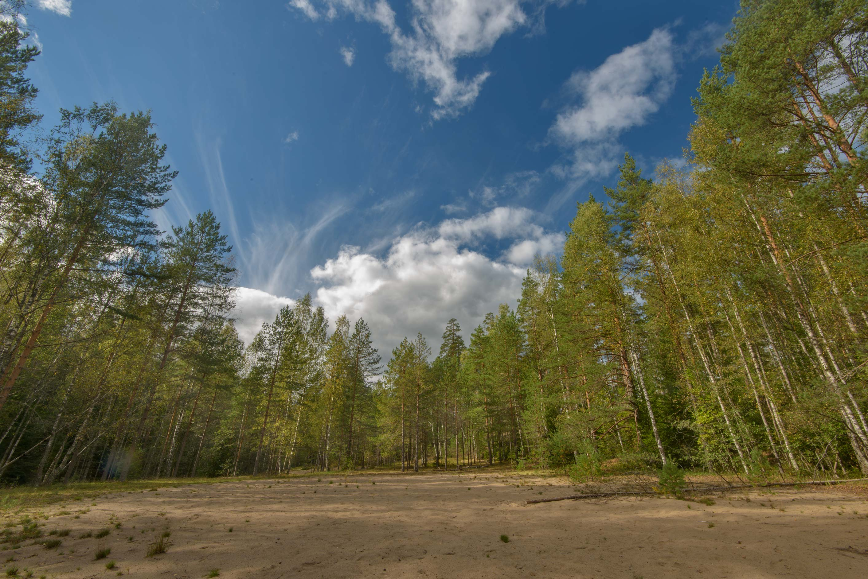 Sandy opening in pine forest near Orekhovo, 40 miles north from St.Petersburg. Russia
