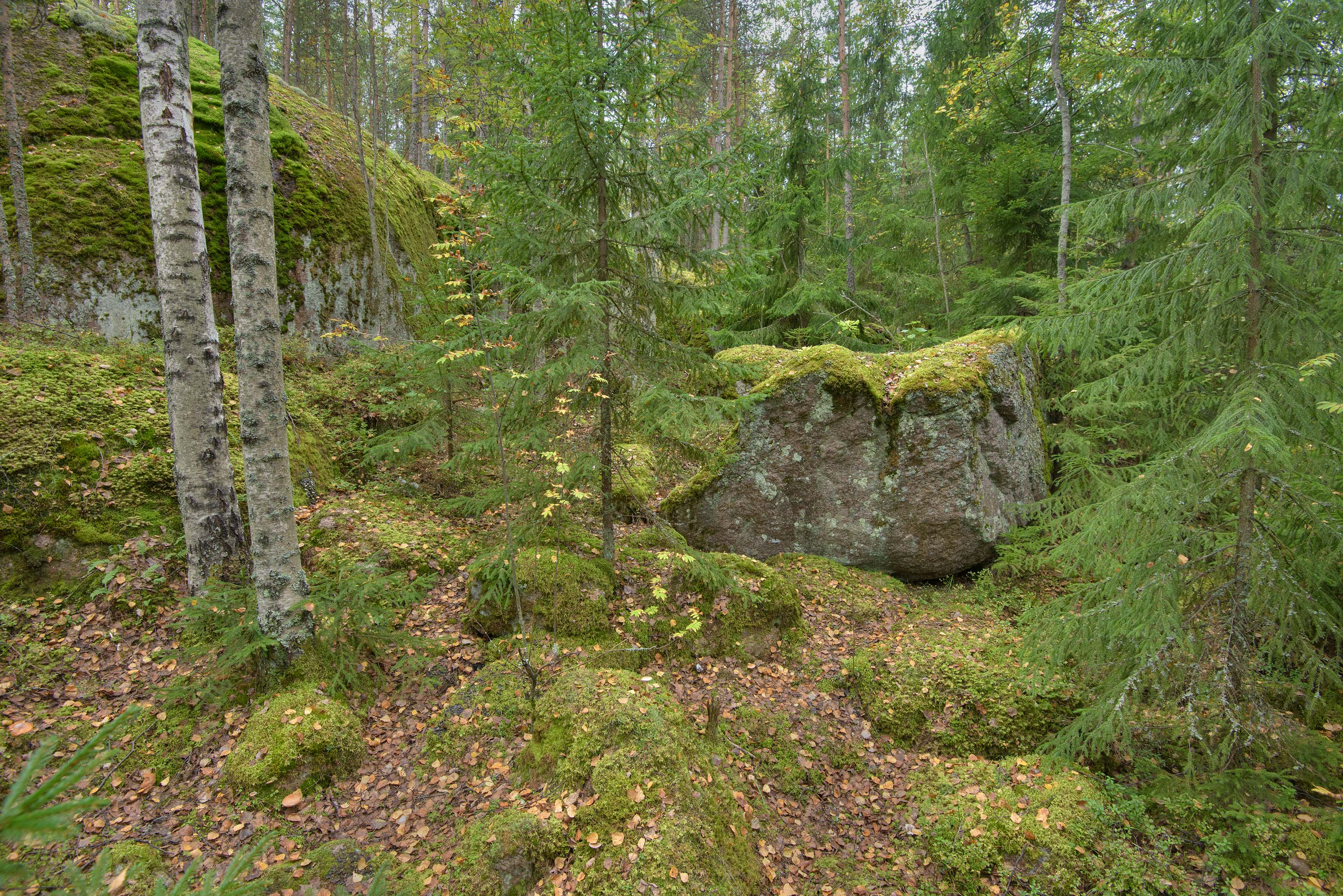 Mossy stones in a forest near Monrepo (Mon Repos) Park. Vyborg, Russia