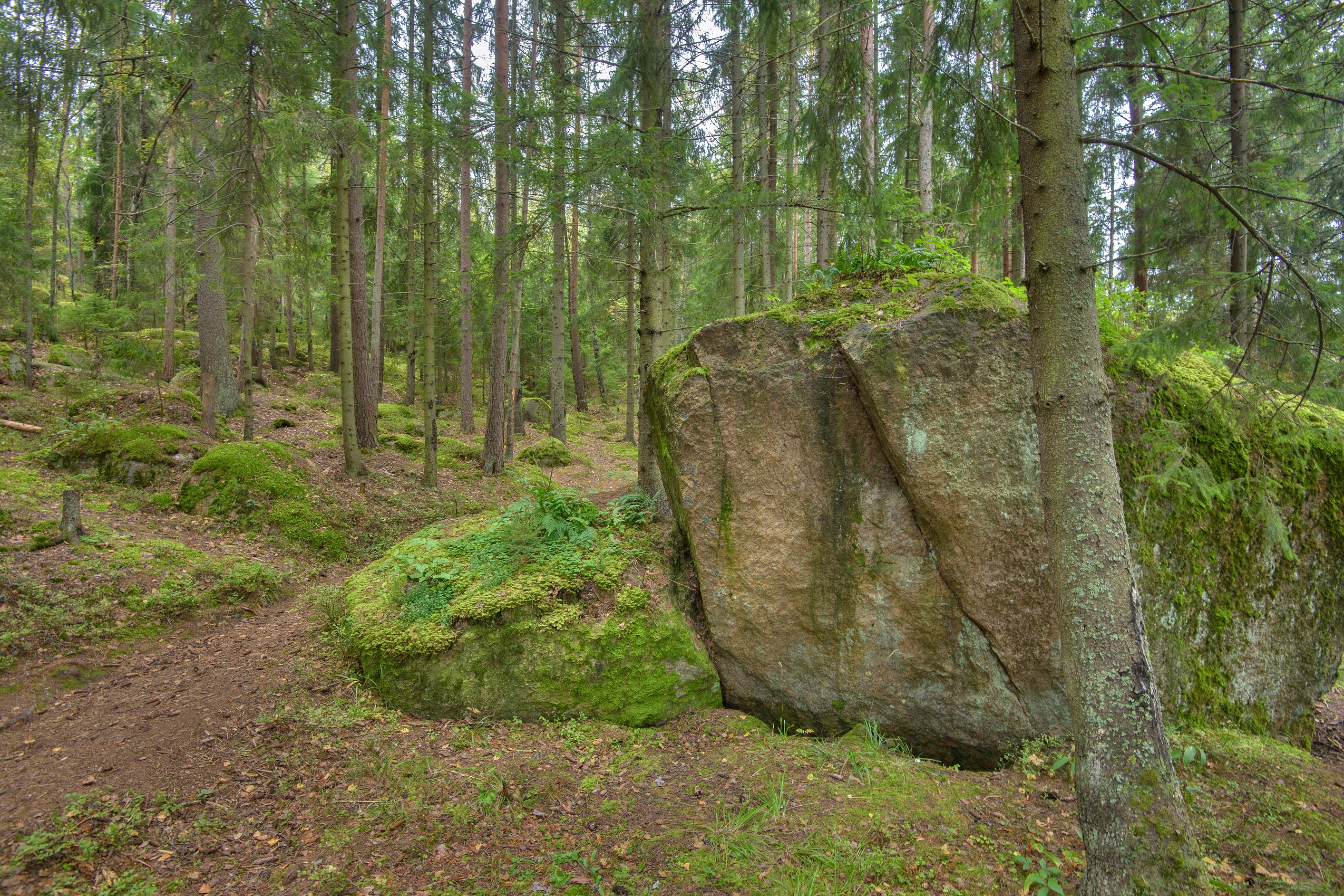 Large mossy stone in a forest near Monrepo (Mon Repos) Park. Vyborg, Russia
