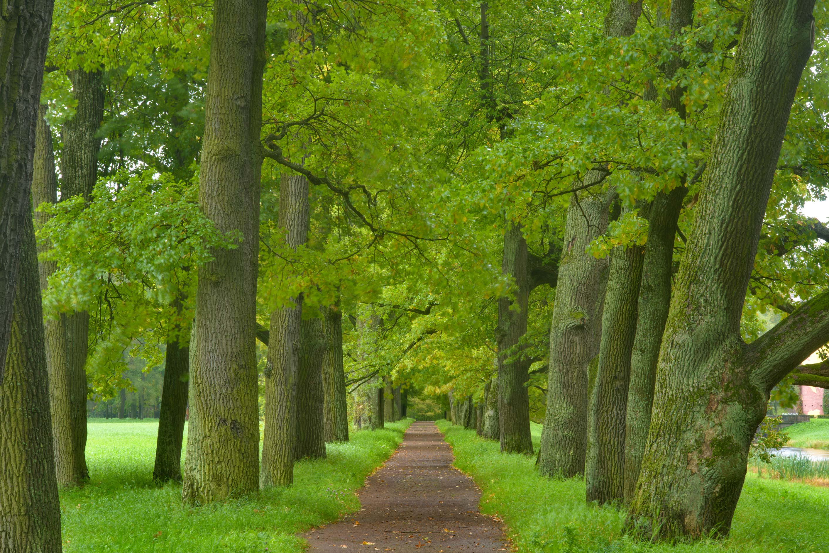 Oak alley near Vittolov Canal in Catherine Park...Selo) near St.Petersburg, Russia