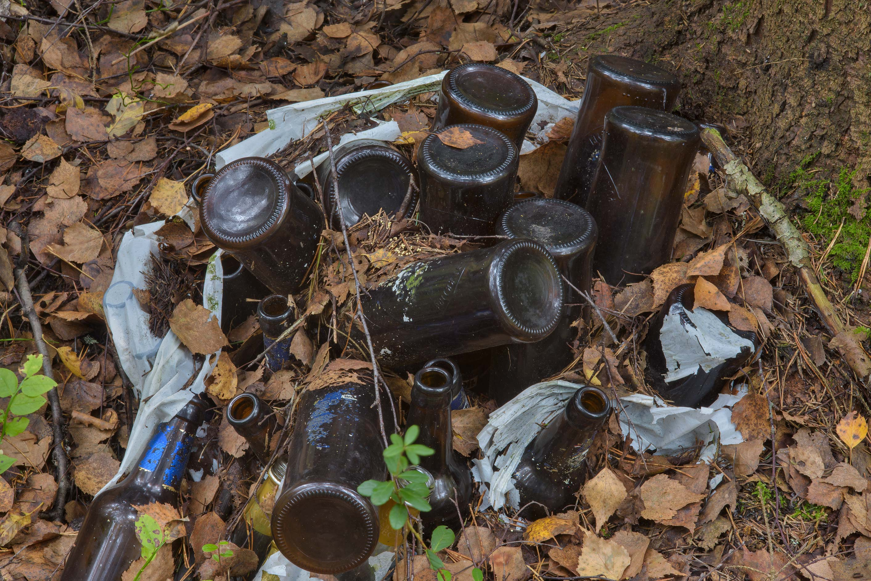 Discarded glass bottles in a forest between...north from St.Petersburg. Russia