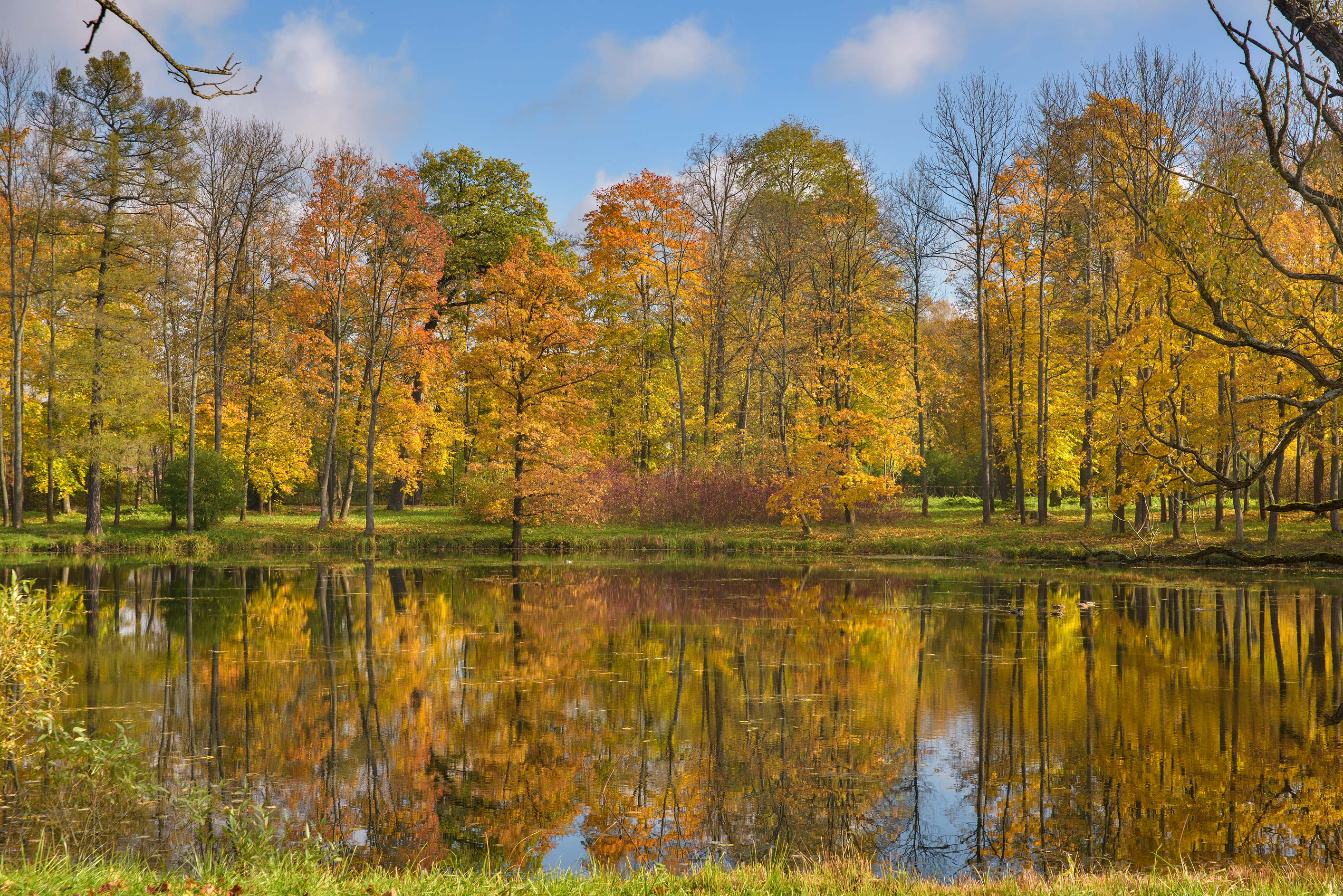 Fall colors of trees near Vittolovsky Shapel Pond...south from St.Petersburg, Russia