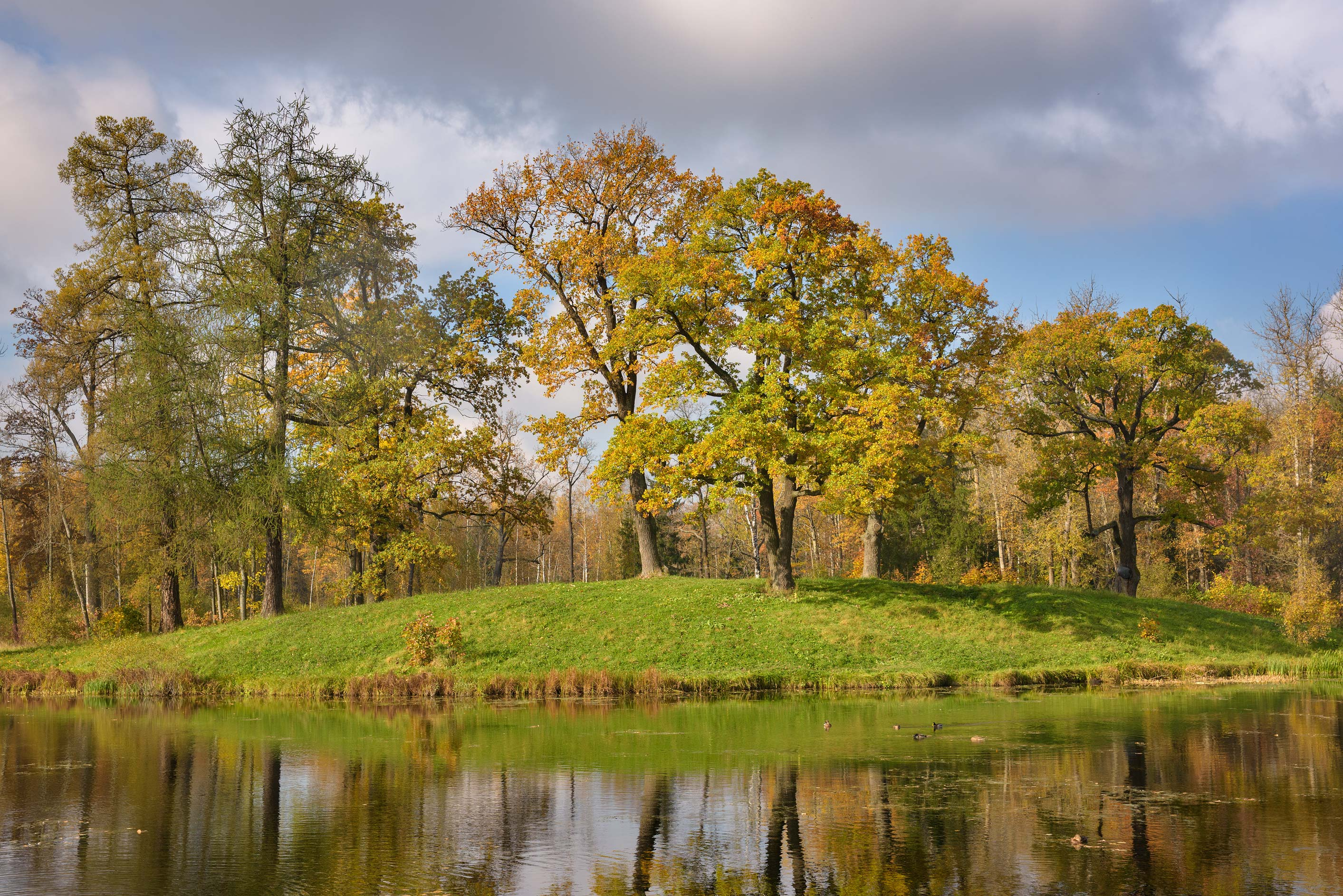 Oaks on a bend of Vittolovsky Shapel Pond in...south from St.Petersburg, Russia