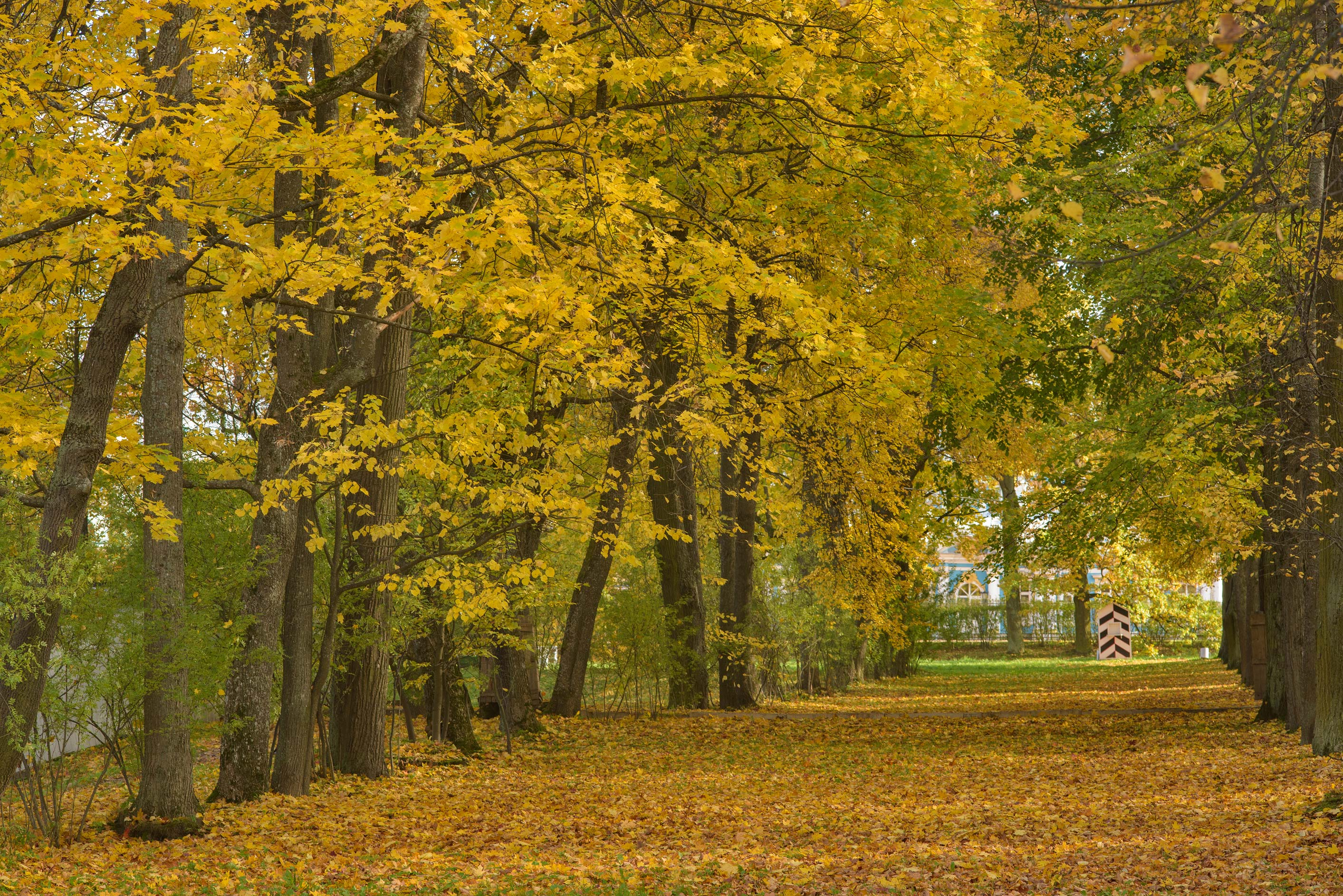Novyi Sad area in Alexander Park. Pushkin (former...south from St.Petersburg, Russia