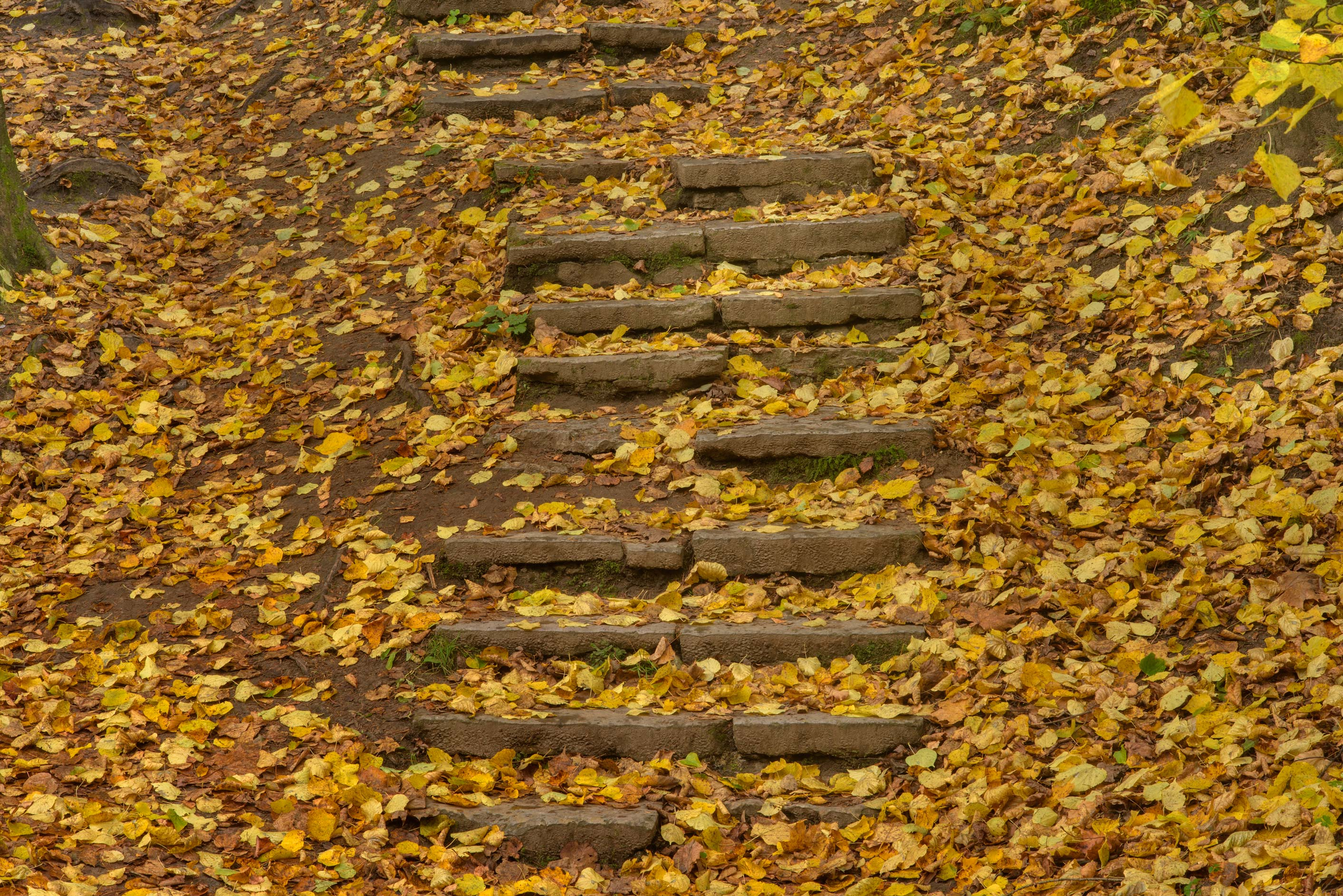 Stone steps on a slope in Old Sylvia in Pavlovsk...suburb of St.Petersburg, Russia