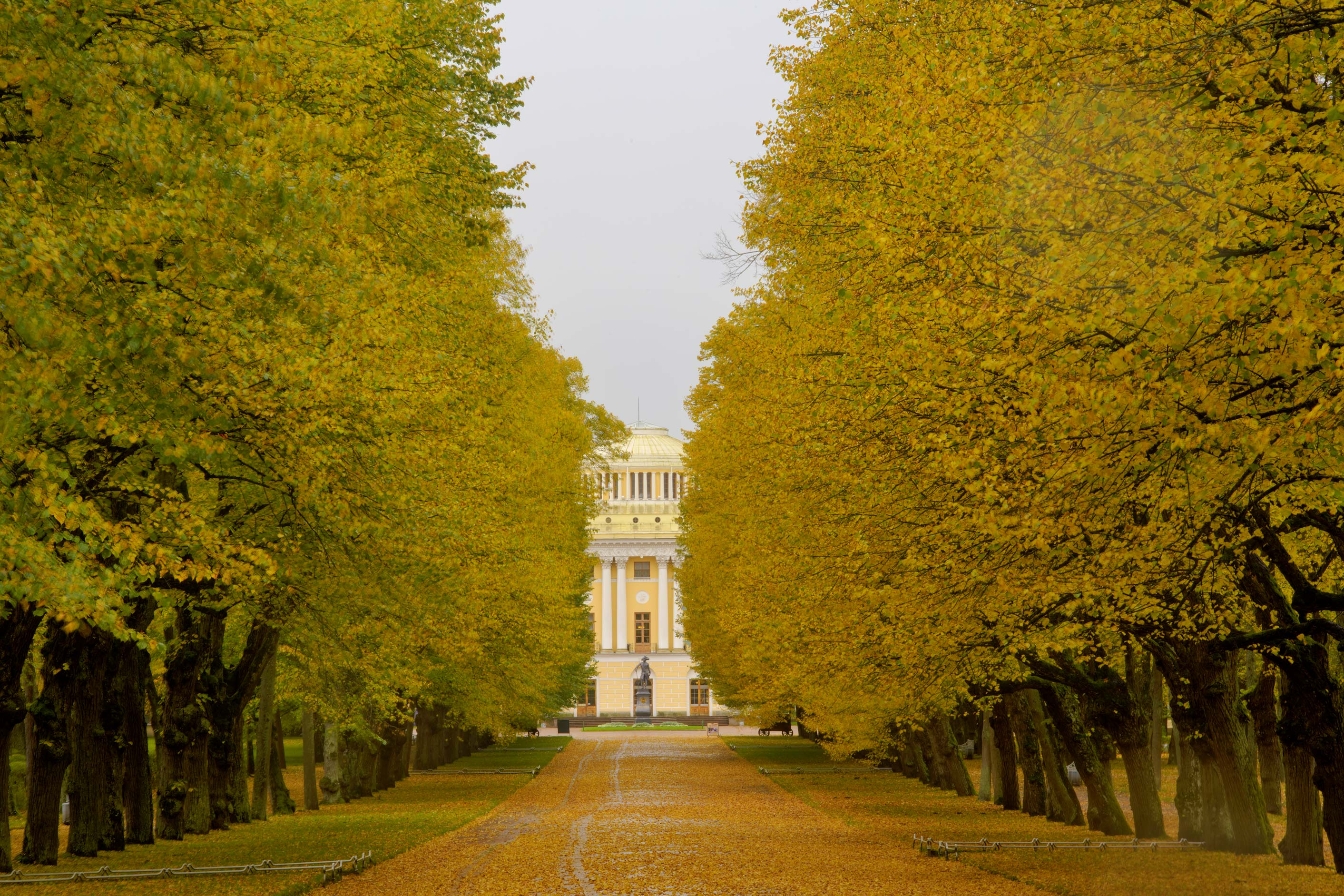 Triple Linden Alley in Pavlovsk Park. Pavlovsk, suburb of St.Petersburg, Russia