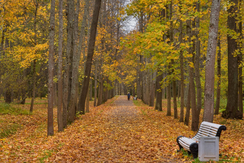 photo 193101 maple alley in lomonosov oranienbaum
