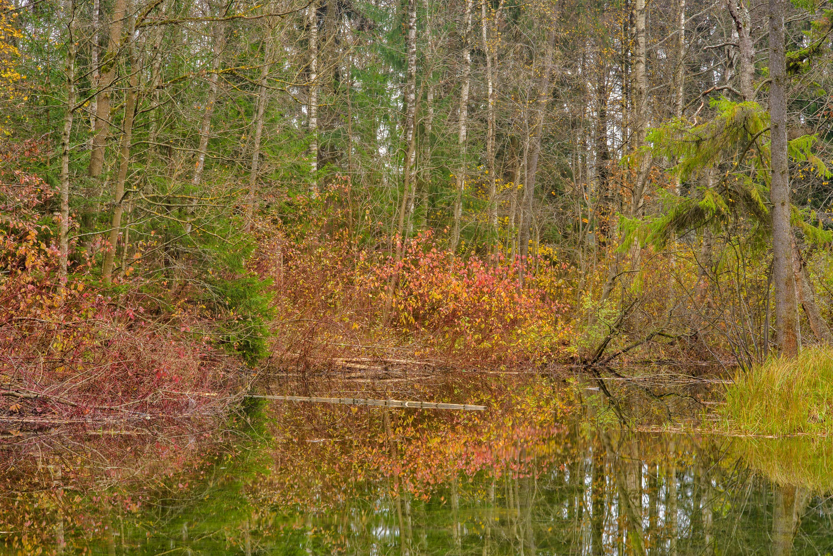 Fall colors from Zakharov Island in Gatchina Park...a suburb of St.Petersburg, Russia