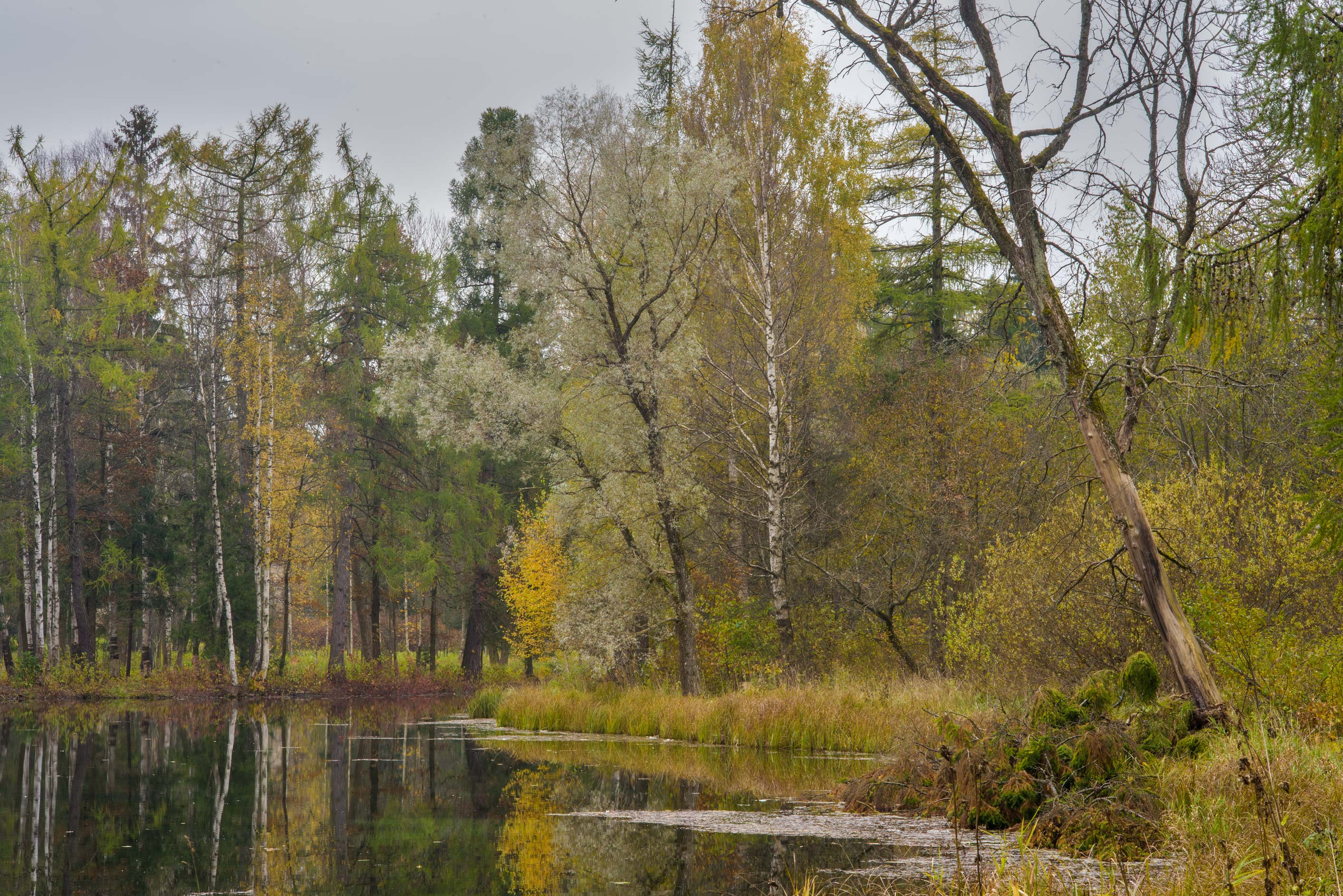 Trees of an island of Beloe Lake in Gatchina Park...a suburb of St.Petersburg, Russia