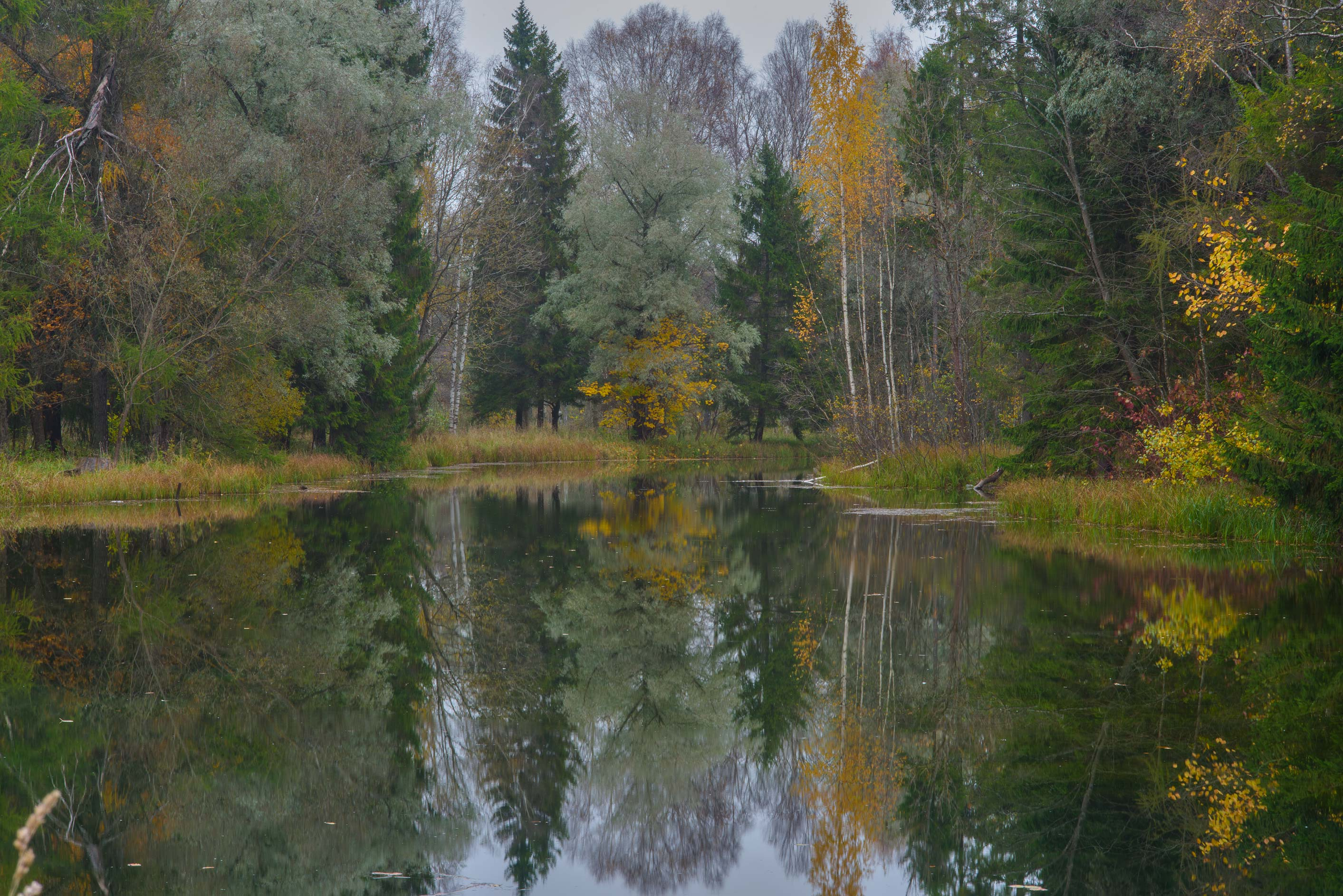 Forest in western part of Beloe Lake in Gatchina...a suburb of St.Petersburg, Russia