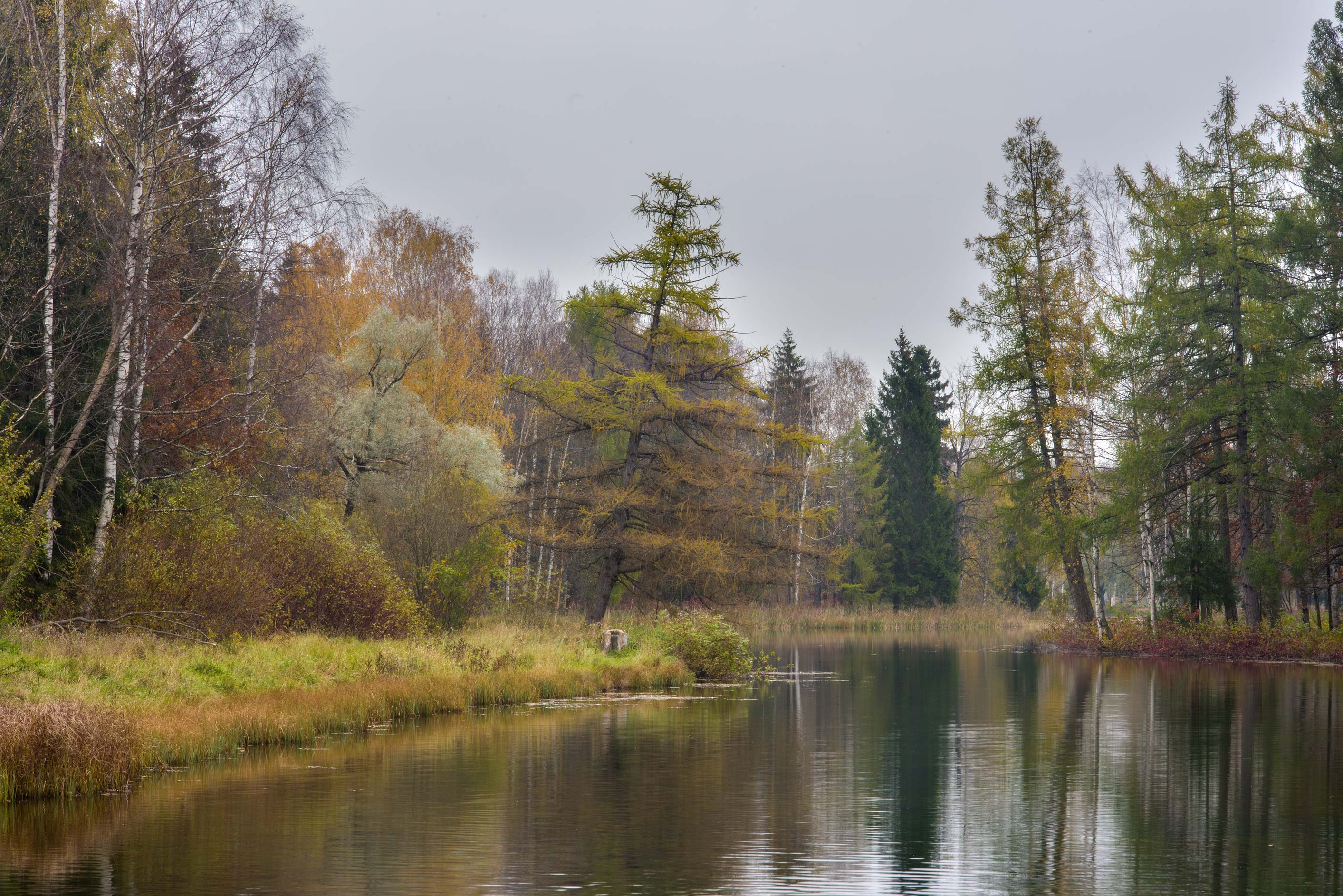 Islands in western Beloe Lake in Gatchina Park...a suburb of St.Petersburg, Russia