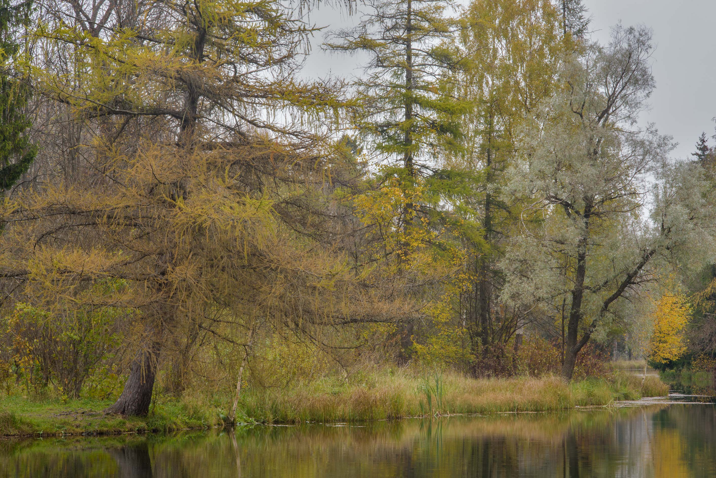 Trees on Beloe Lake in Gatchina Park. Gatchina, a suburb of St.Petersburg, Russia