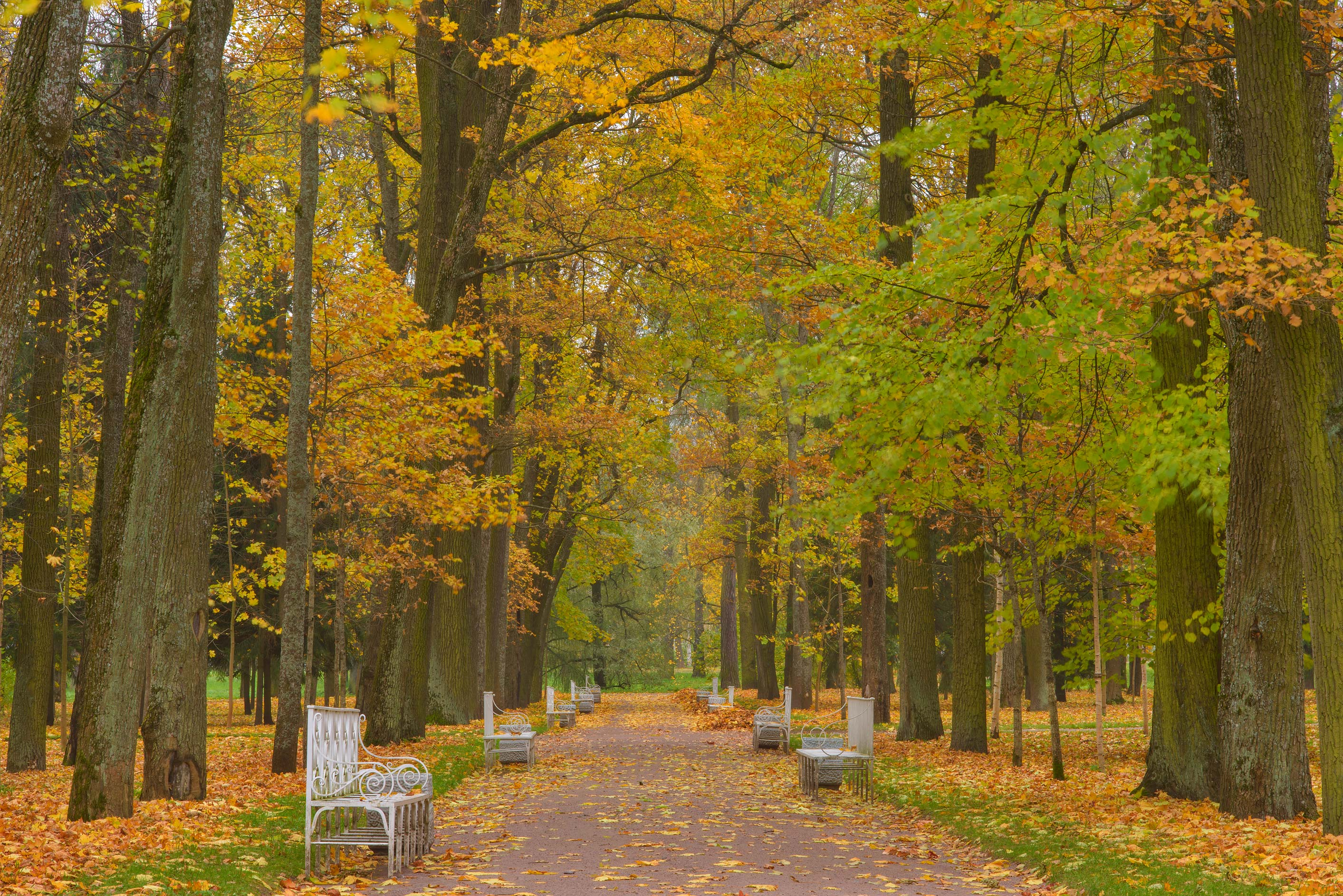 Fall colors of an alley in Catherine Park...Selo) near St.Petersburg, Russia
