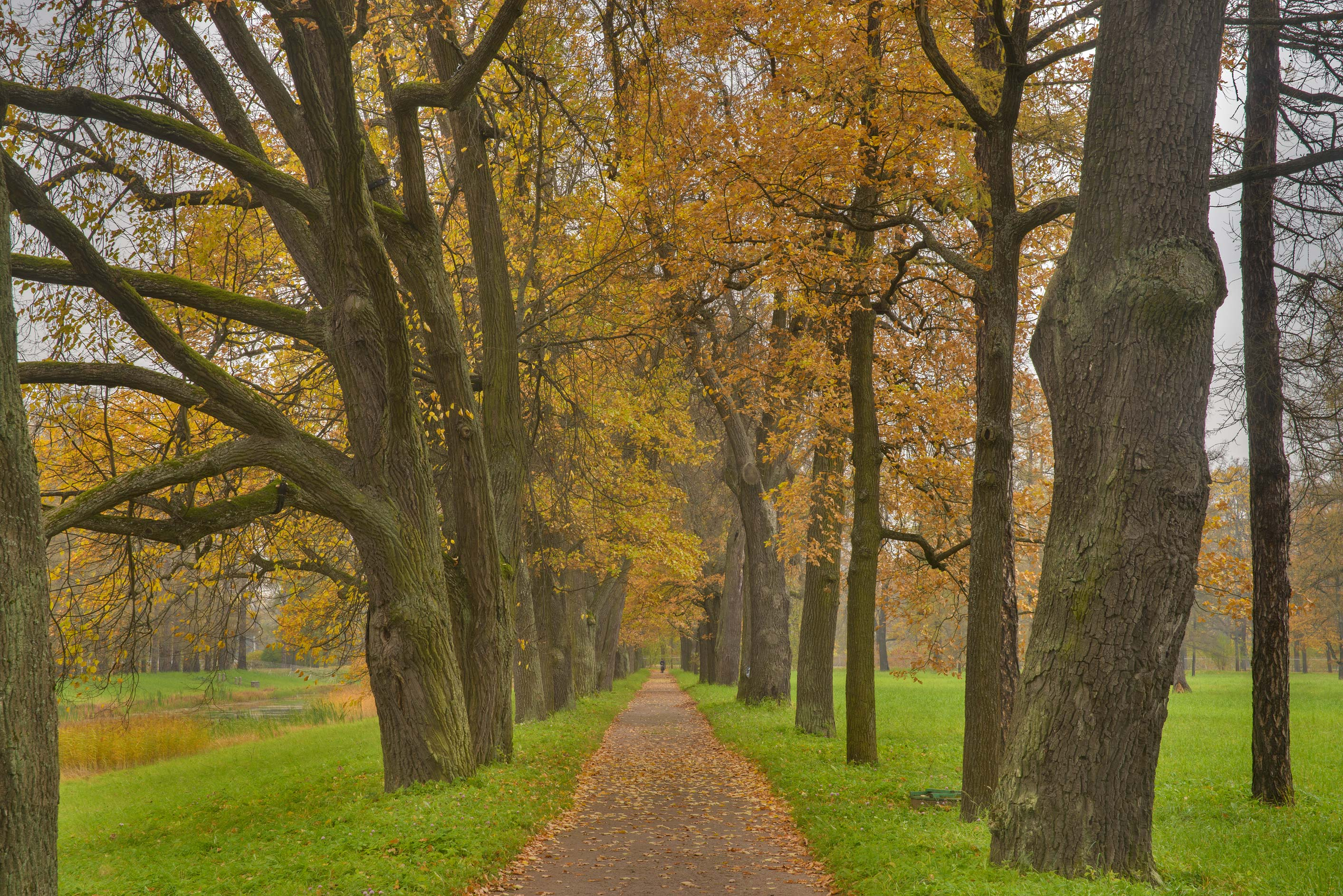 Oak alley on Rose Field in Catherine Park...Selo) near St.Petersburg, Russia