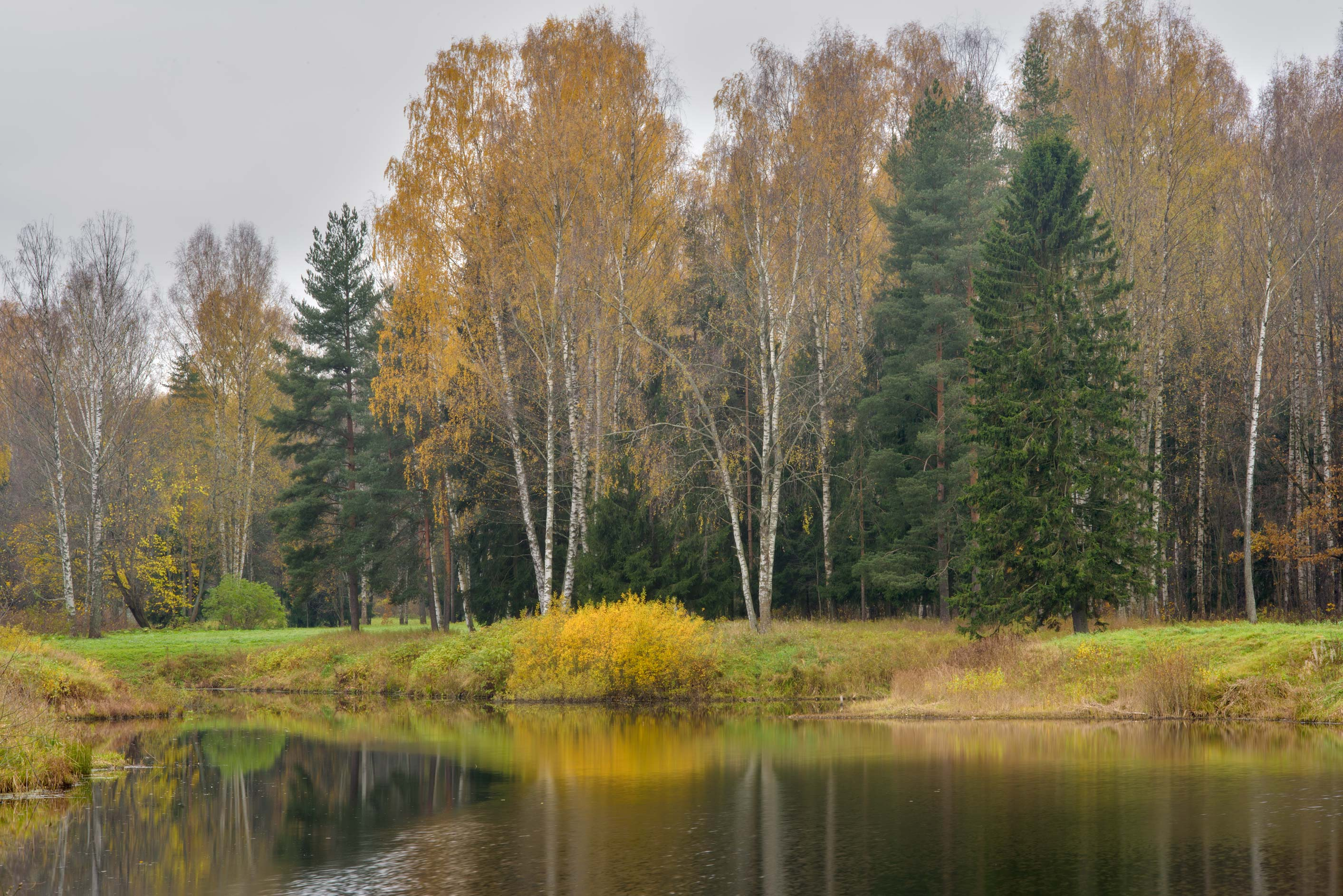 Novoshaleyny Pond from Krasnogo Solntsa Alley in...a suburb of St.Petersburg, Russia