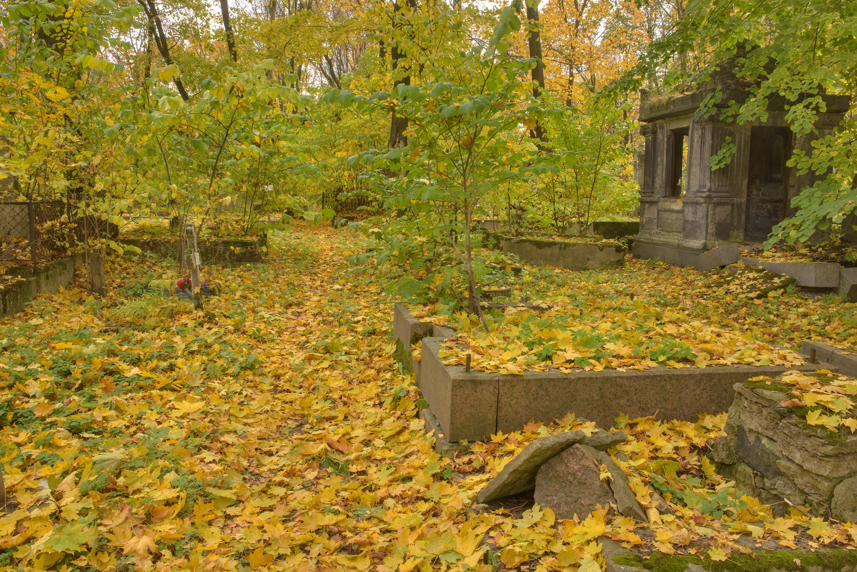 Yellow leaves in Novodevichye Cemetery at Moskovskiy Prospect. St.Petersburg, Russia