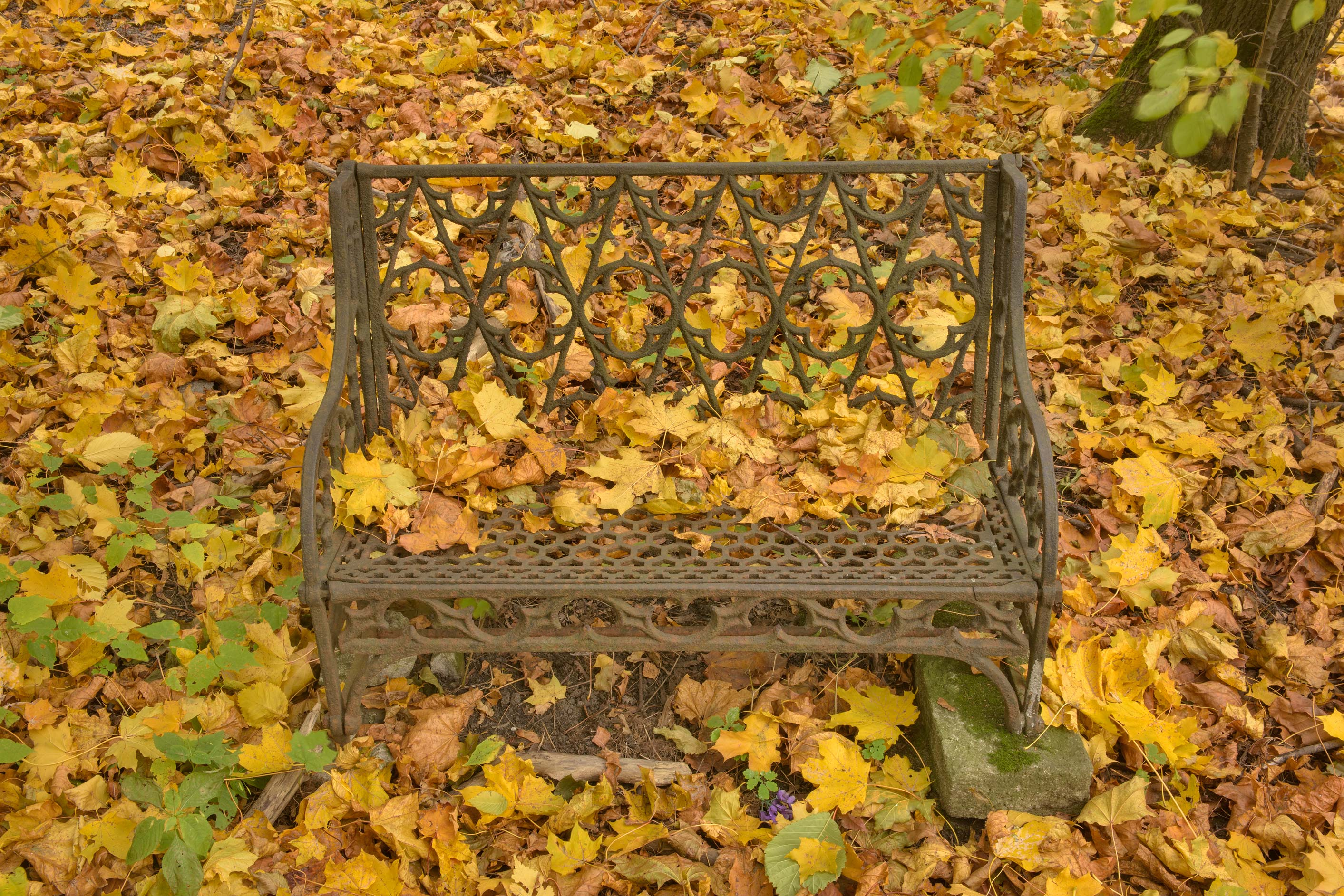 Iron bench with yellow leaves in Novodevichye...Prospect. St.Petersburg, Russia