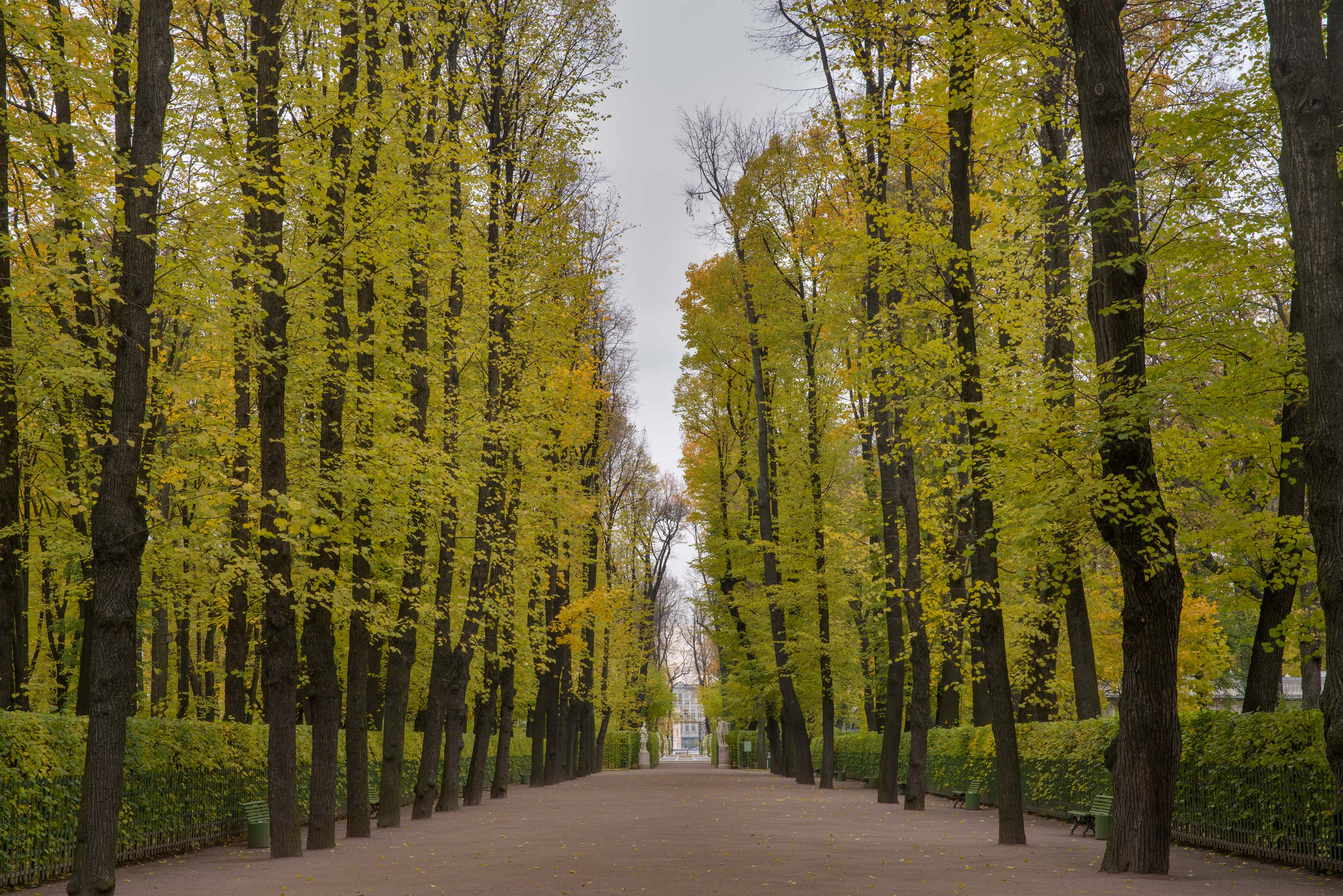 Linden alley in Letny Sad (Summer Garden). St.Petersburg, Russia