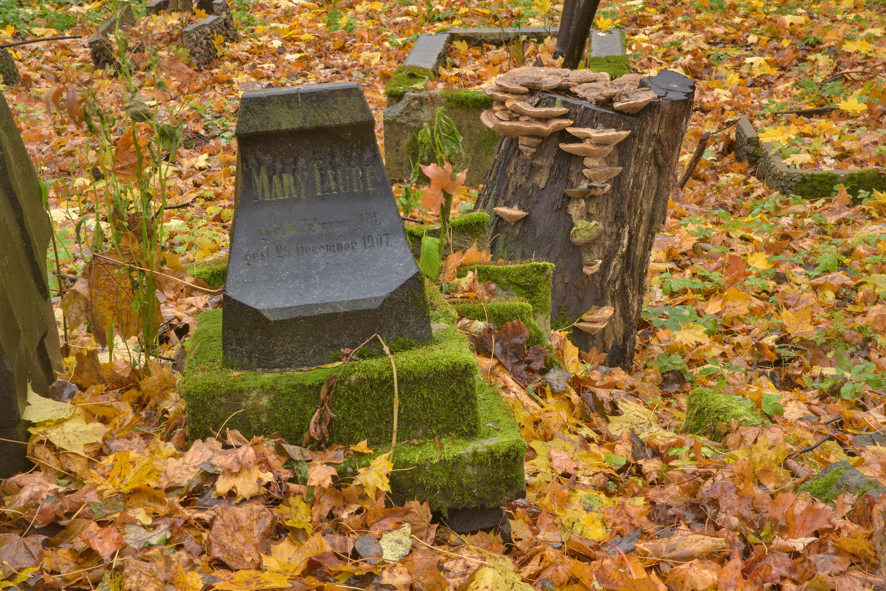 Tomb of M. Taube in Smolenskoe Lutheran Cemetery...Island. St.Petersburg, Russia
