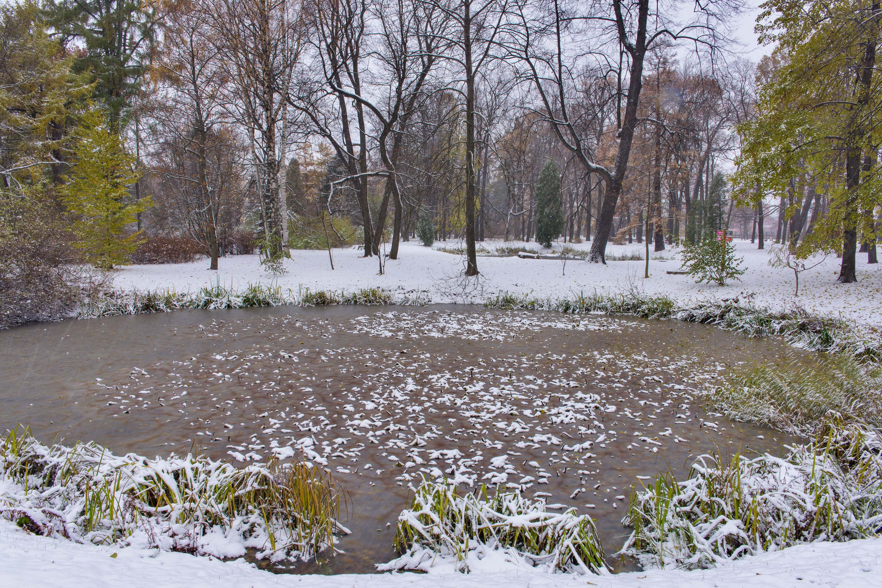 Lily pond in snow in Botanic Gardens of Komarov Botanical Institute. St.Petersburg, Russia