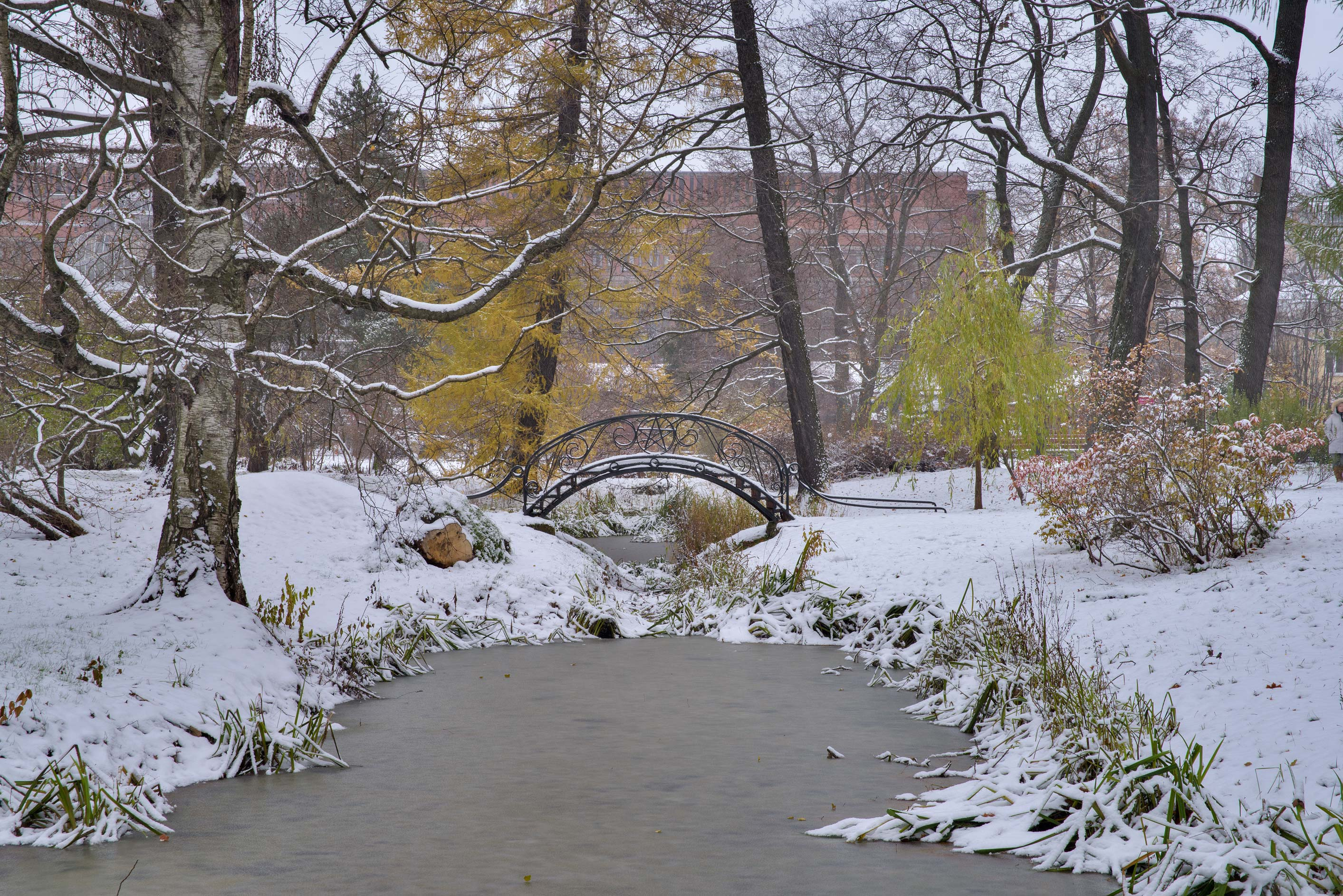 Humpy iron bridge in snow in Botanic Gardens of...Institute. St.Petersburg, Russia