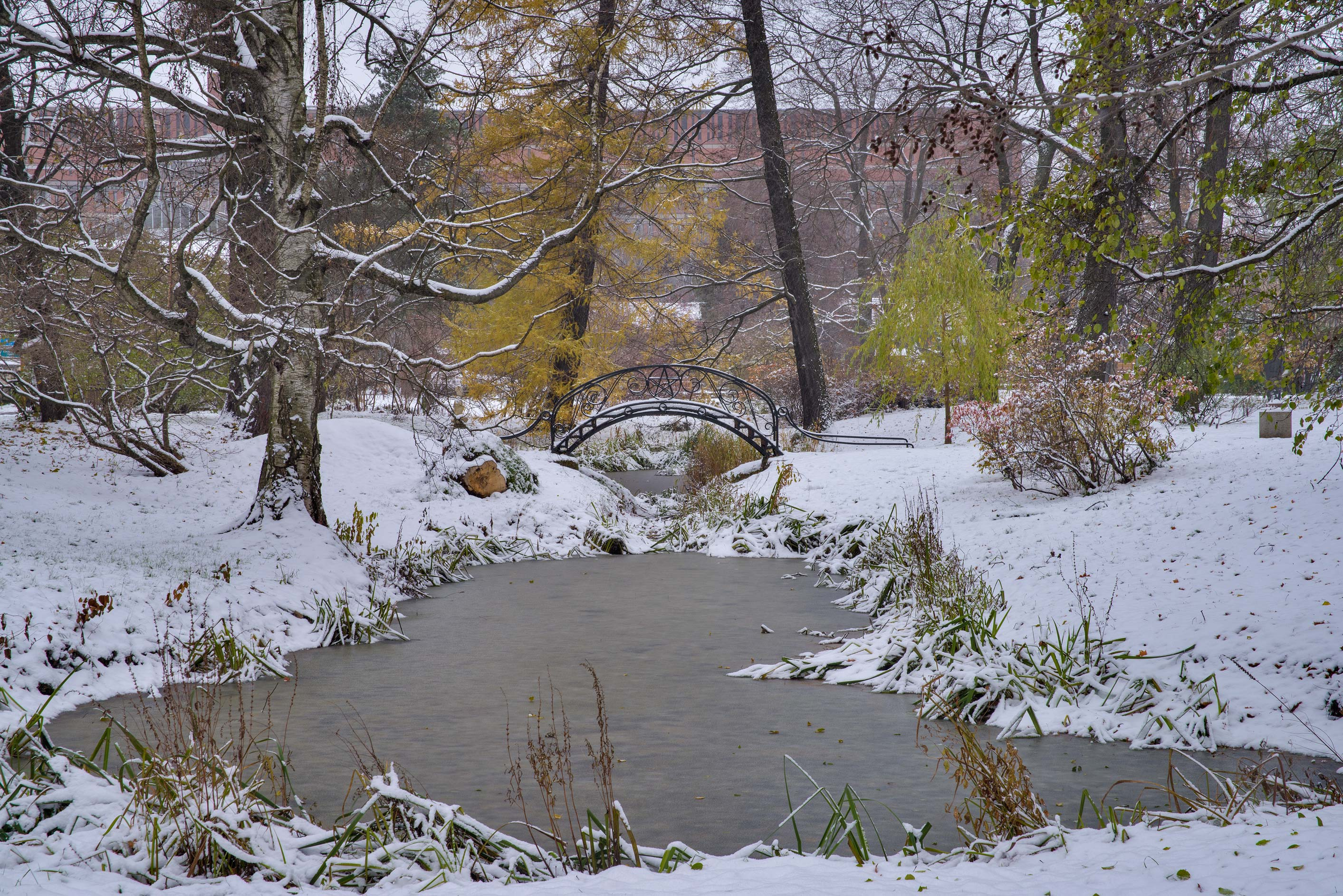 Canal in snow in Botanic Gardens of Komarov Botanical Institute. St.Petersburg, Russia