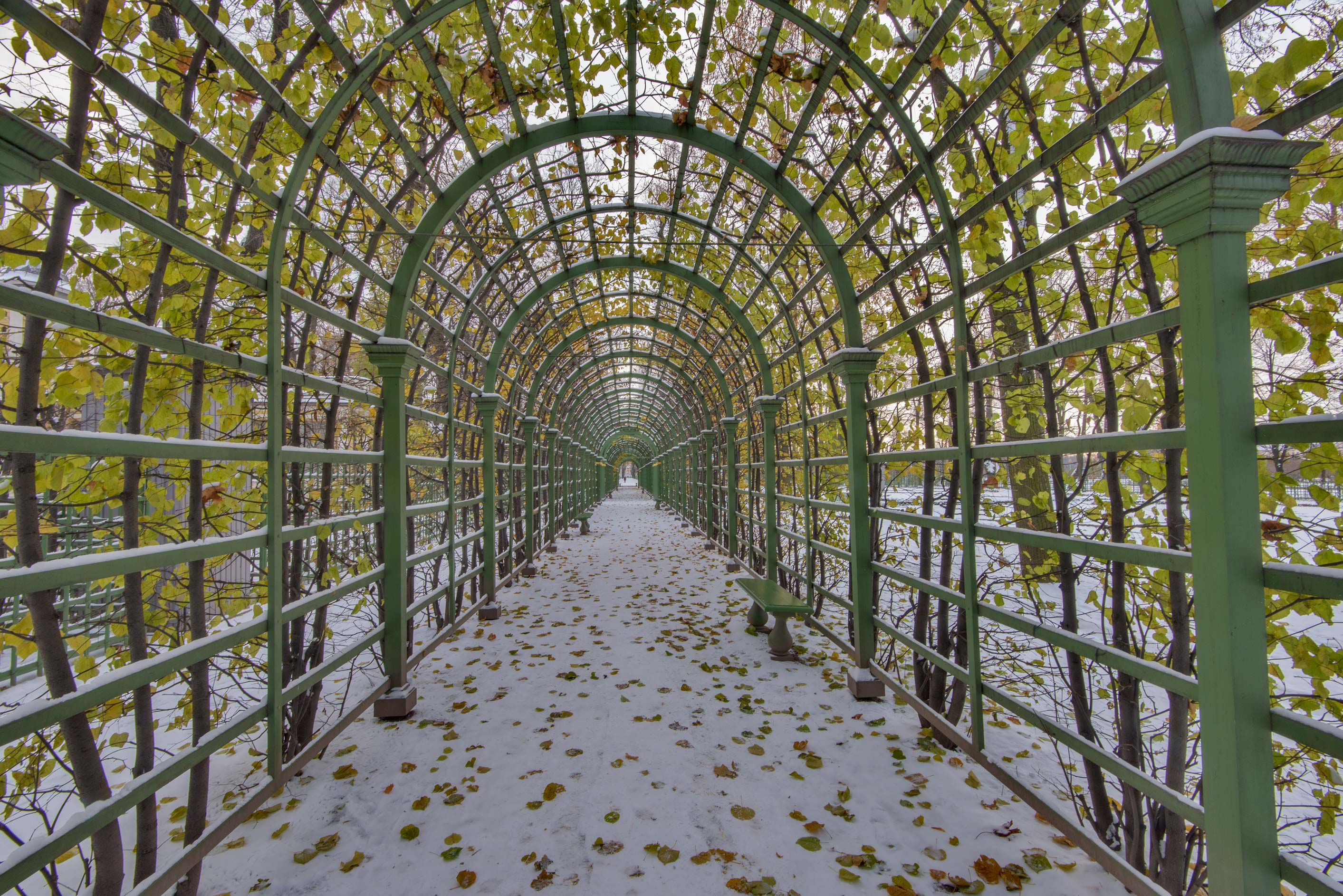 Arbor of Letny Sad (Summer Garden). St.Petersburg, Russia